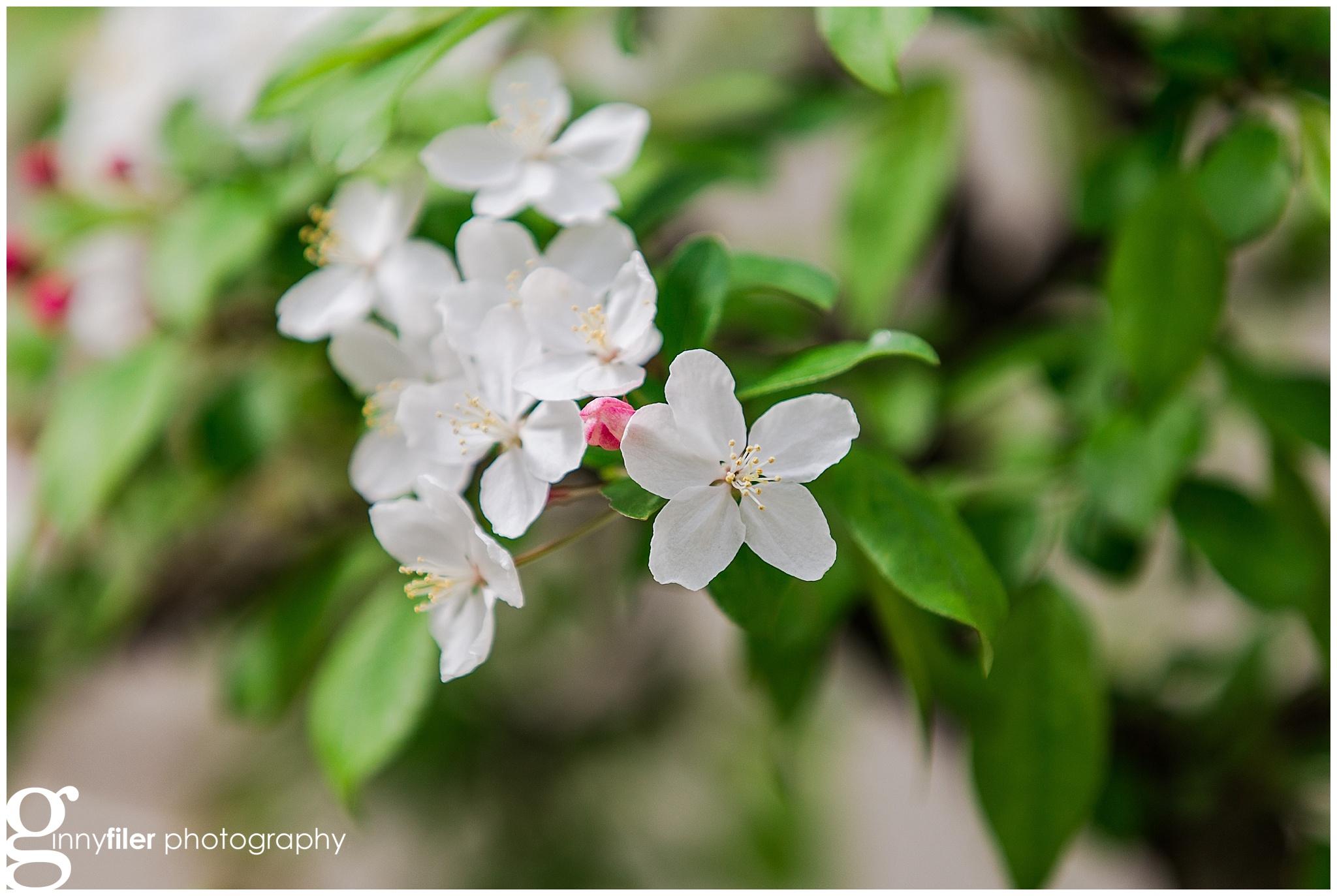 national_arboreteum_0119.jpg