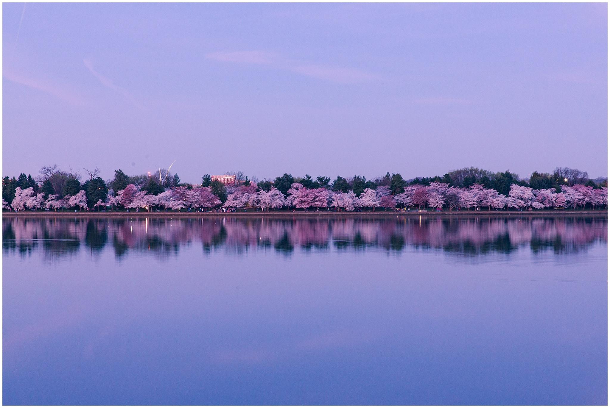 cherryblossom_washingtondc_spring_pink_0014.jpg