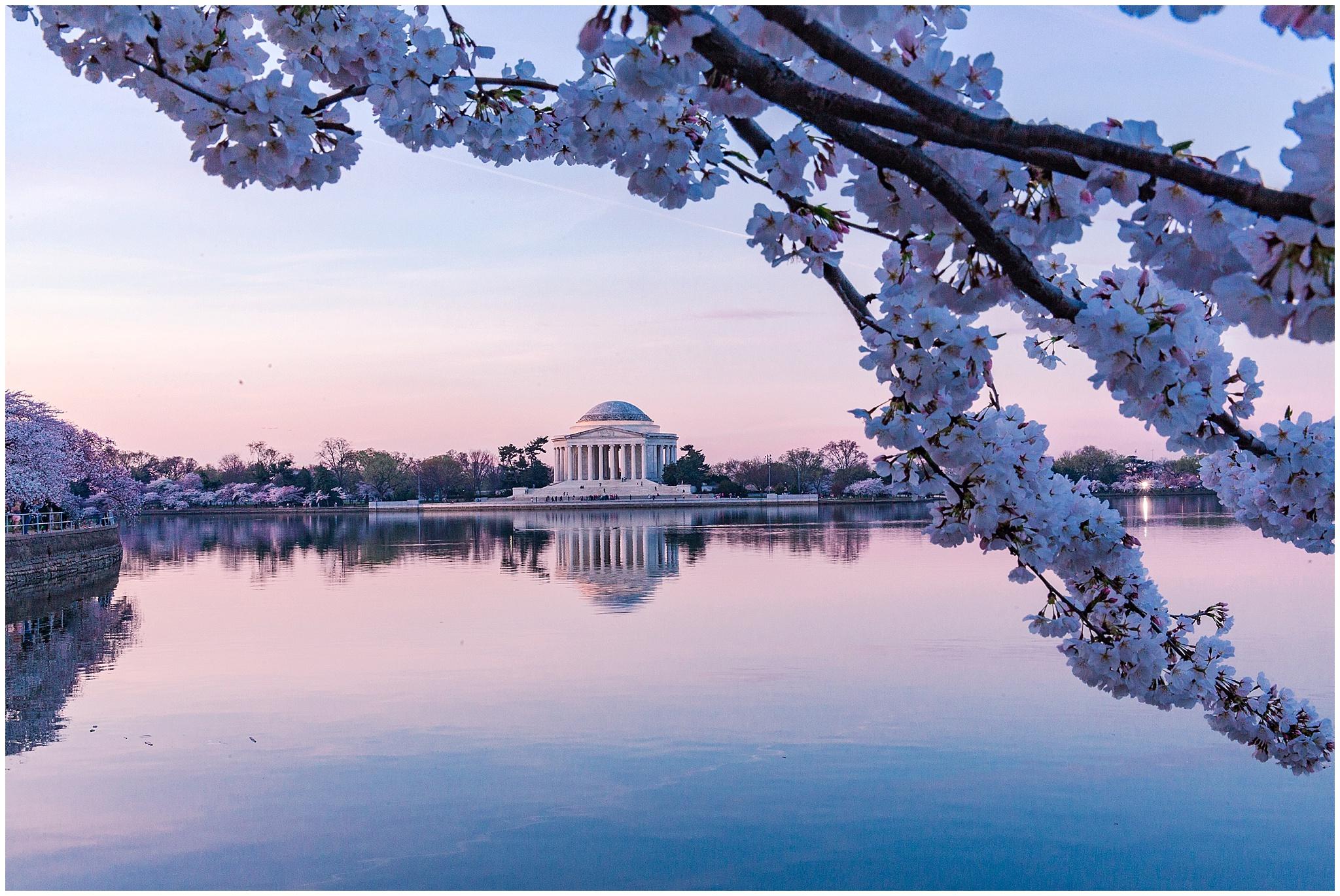 cherryblossom_washingtondc_spring_pink_0025.jpg