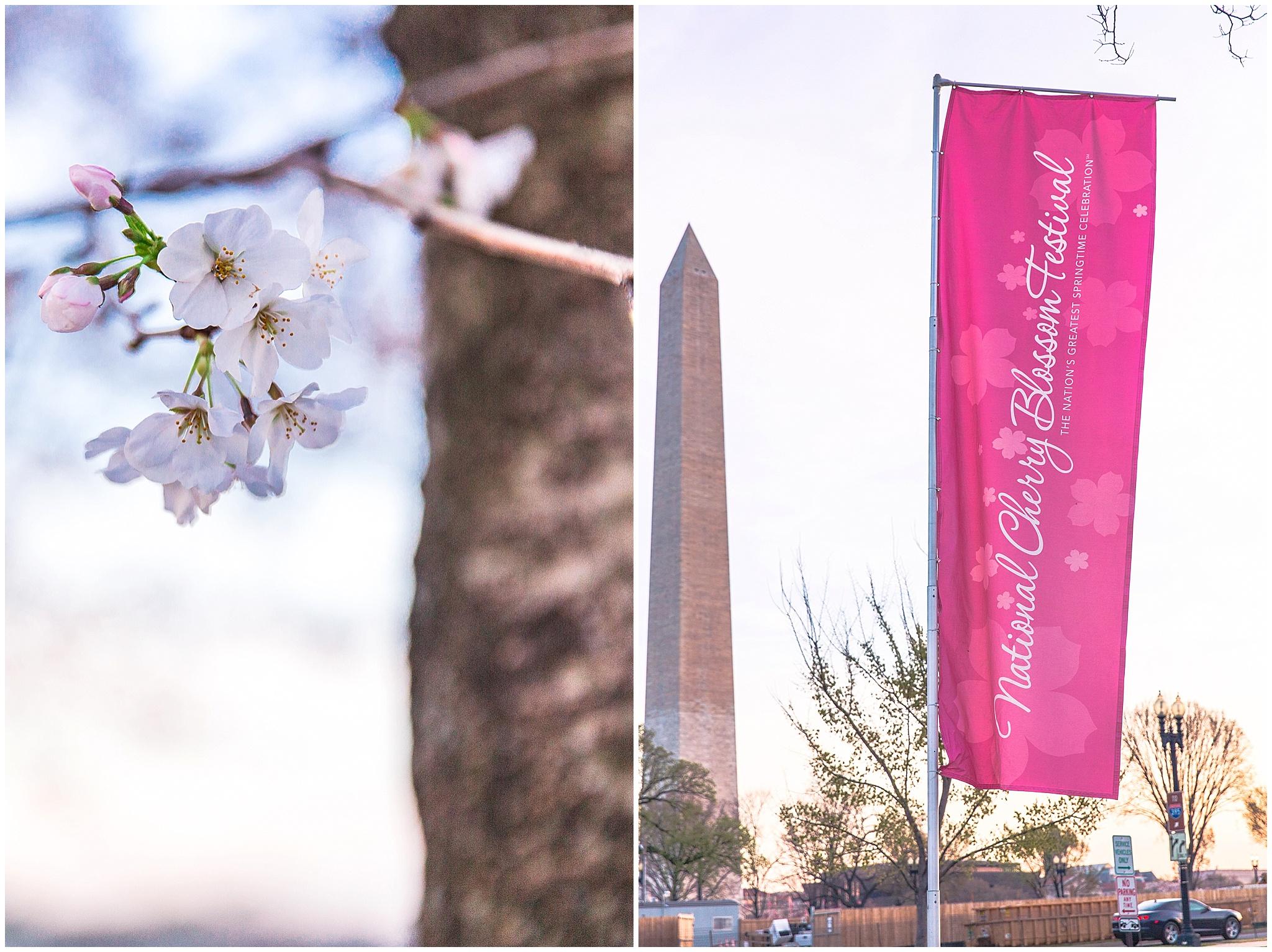 cherryblossom_washingtondc_spring_pink_0034.jpg