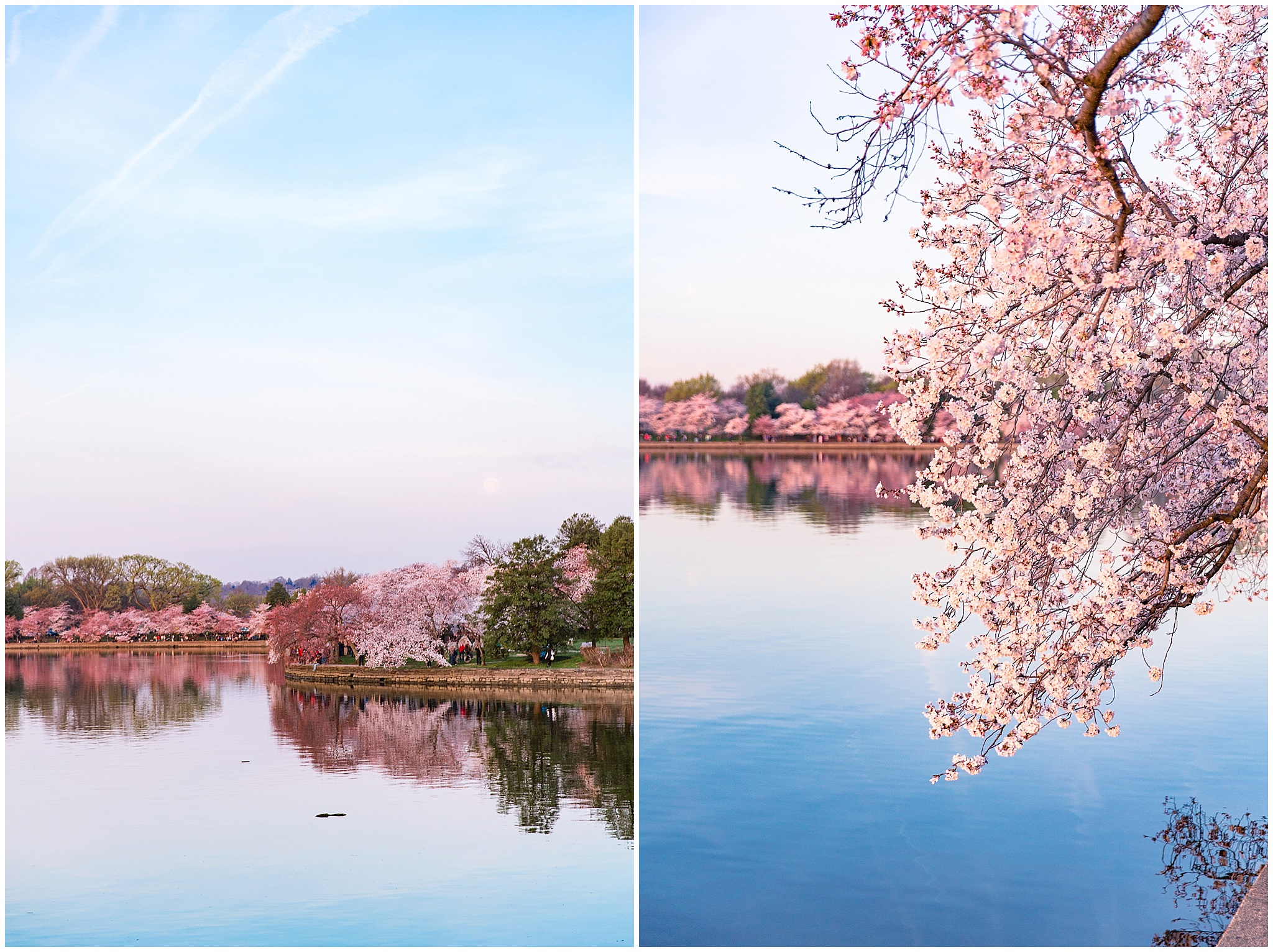 cherryblossom_washingtondc_spring_pink_0036.jpg