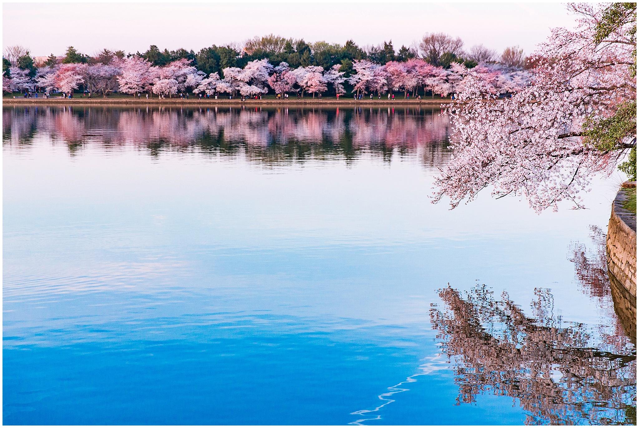 cherryblossom_washingtondc_spring_pink_0038.jpg