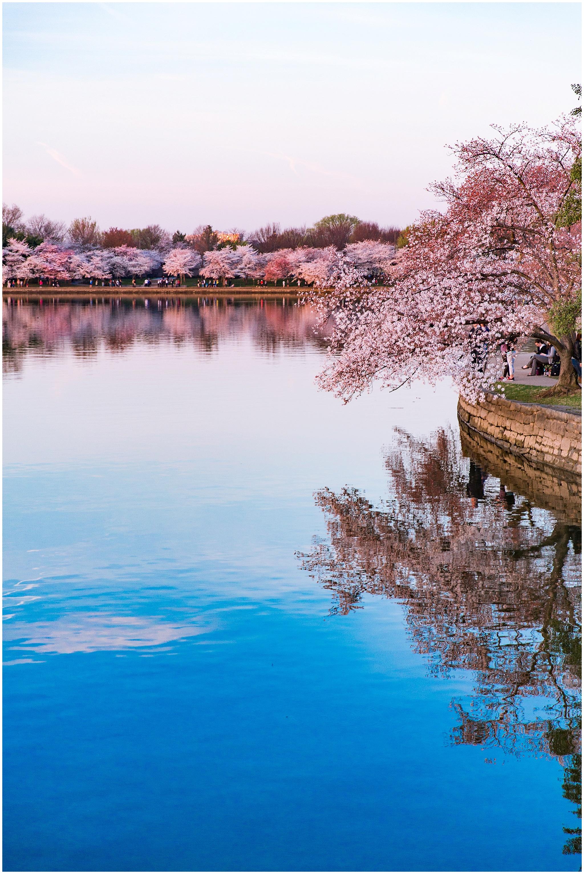cherryblossom_washingtondc_spring_pink_0037.jpg