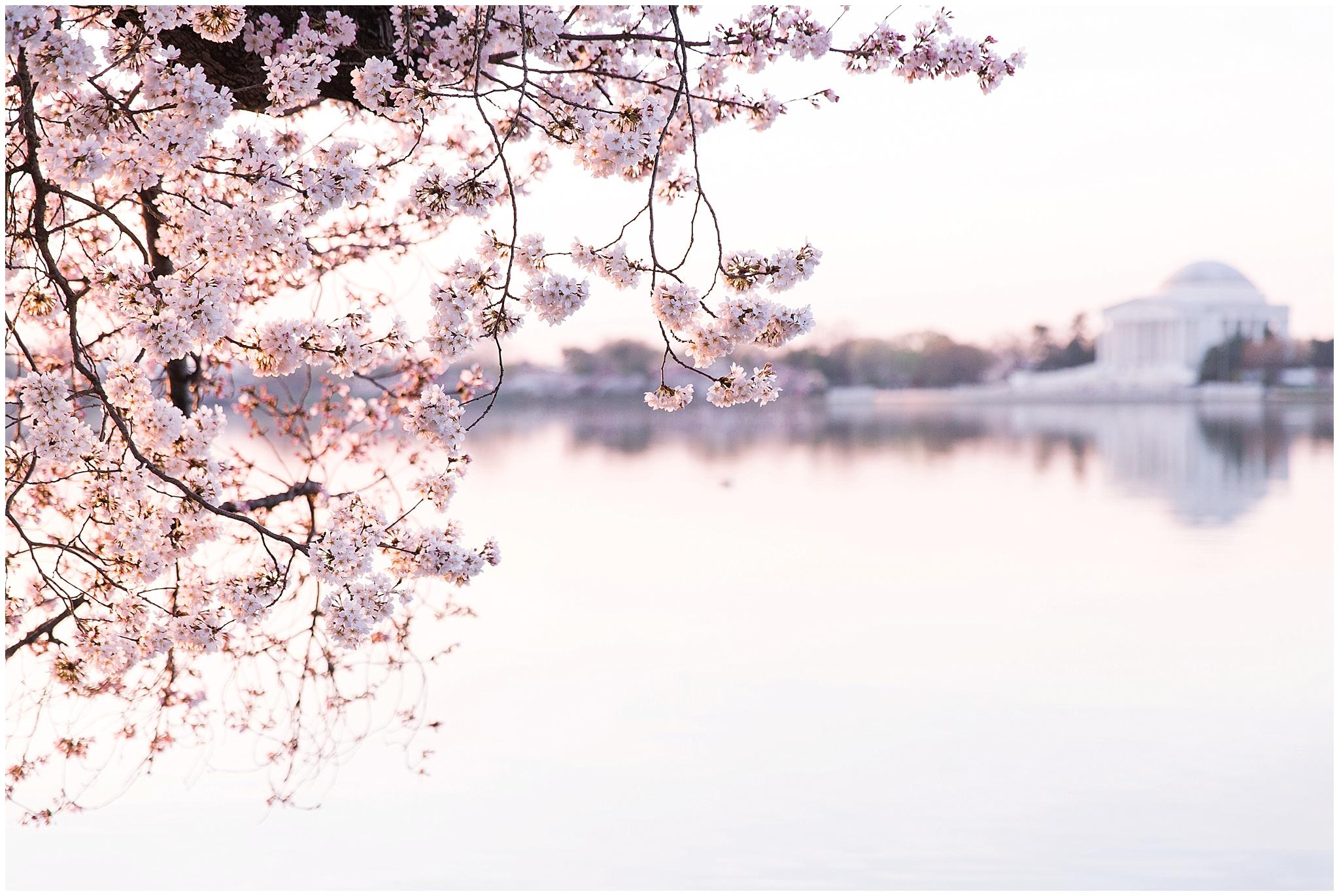 cherryblossom_washingtondc_spring_pink_0043.jpg