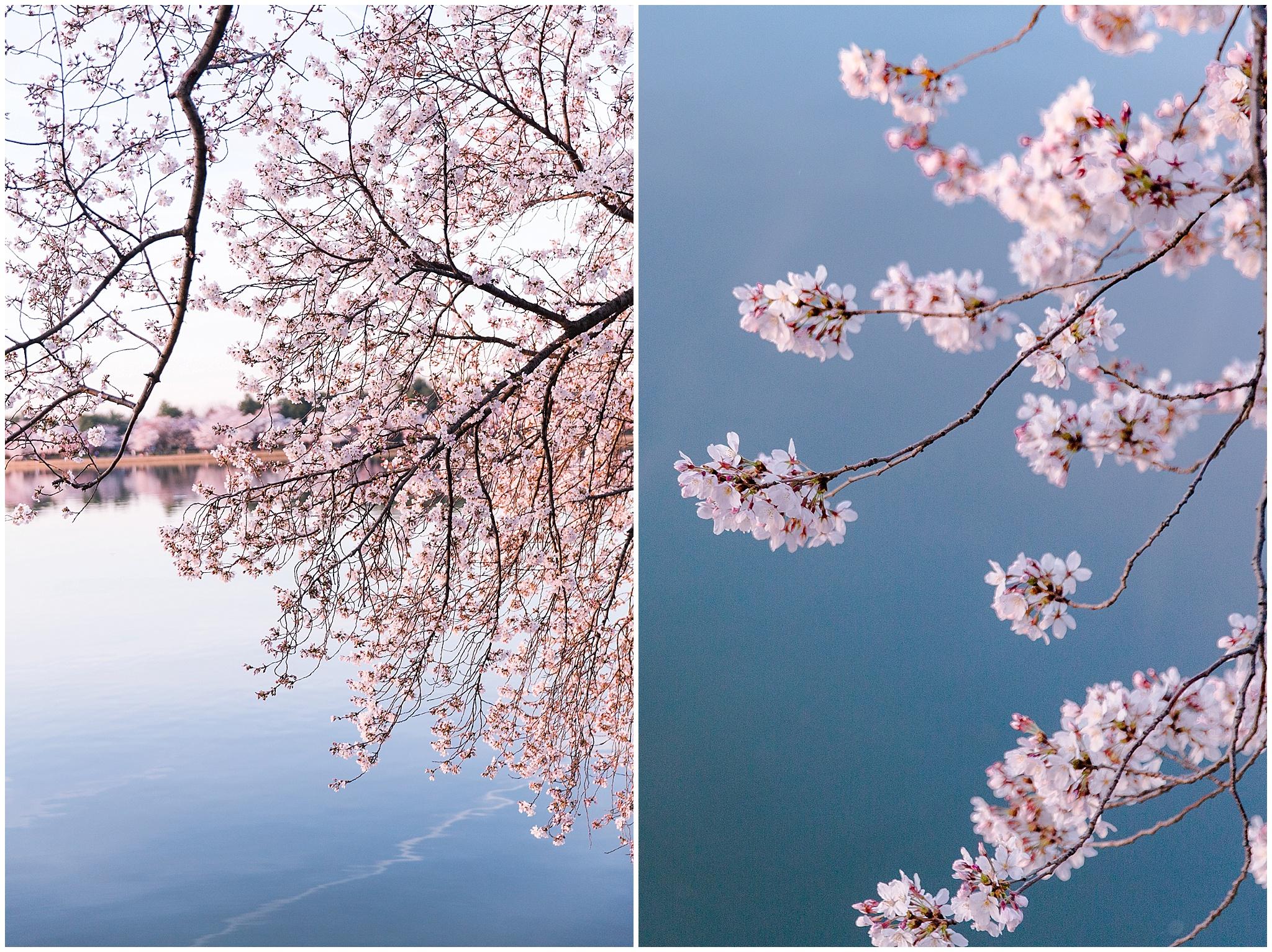 cherryblossom_washingtondc_spring_pink_0045.jpg