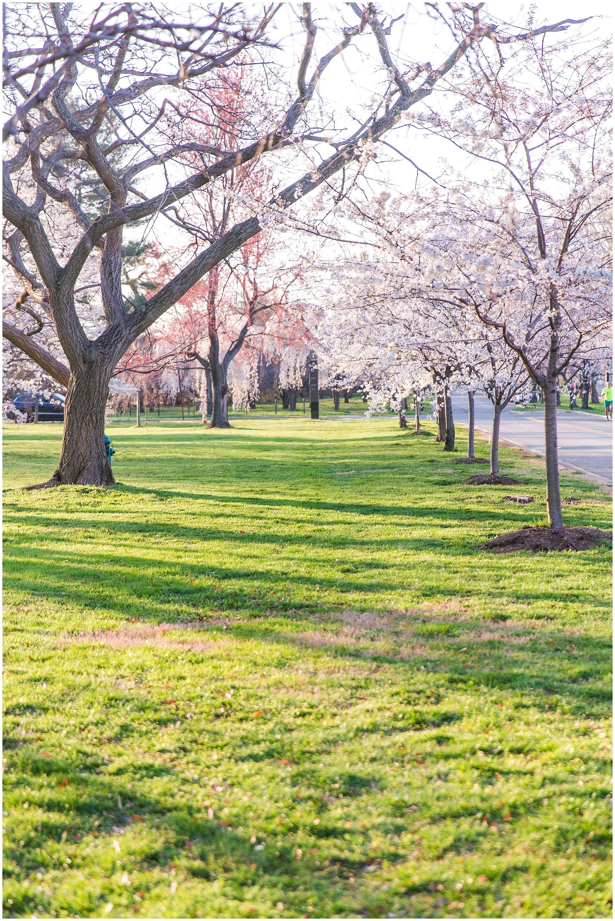 cherryblossom_washingtondc_spring_pink_0058.jpg