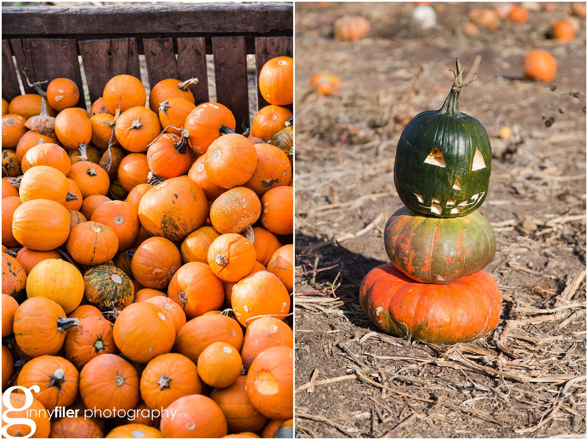 pumpkin_fall_0004.jpg