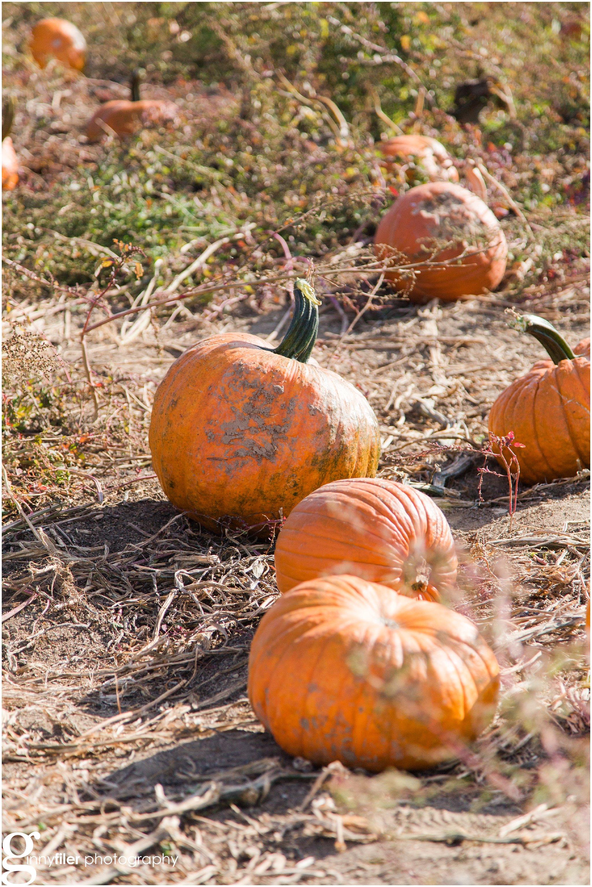 pumpkin_fall_0006.jpg