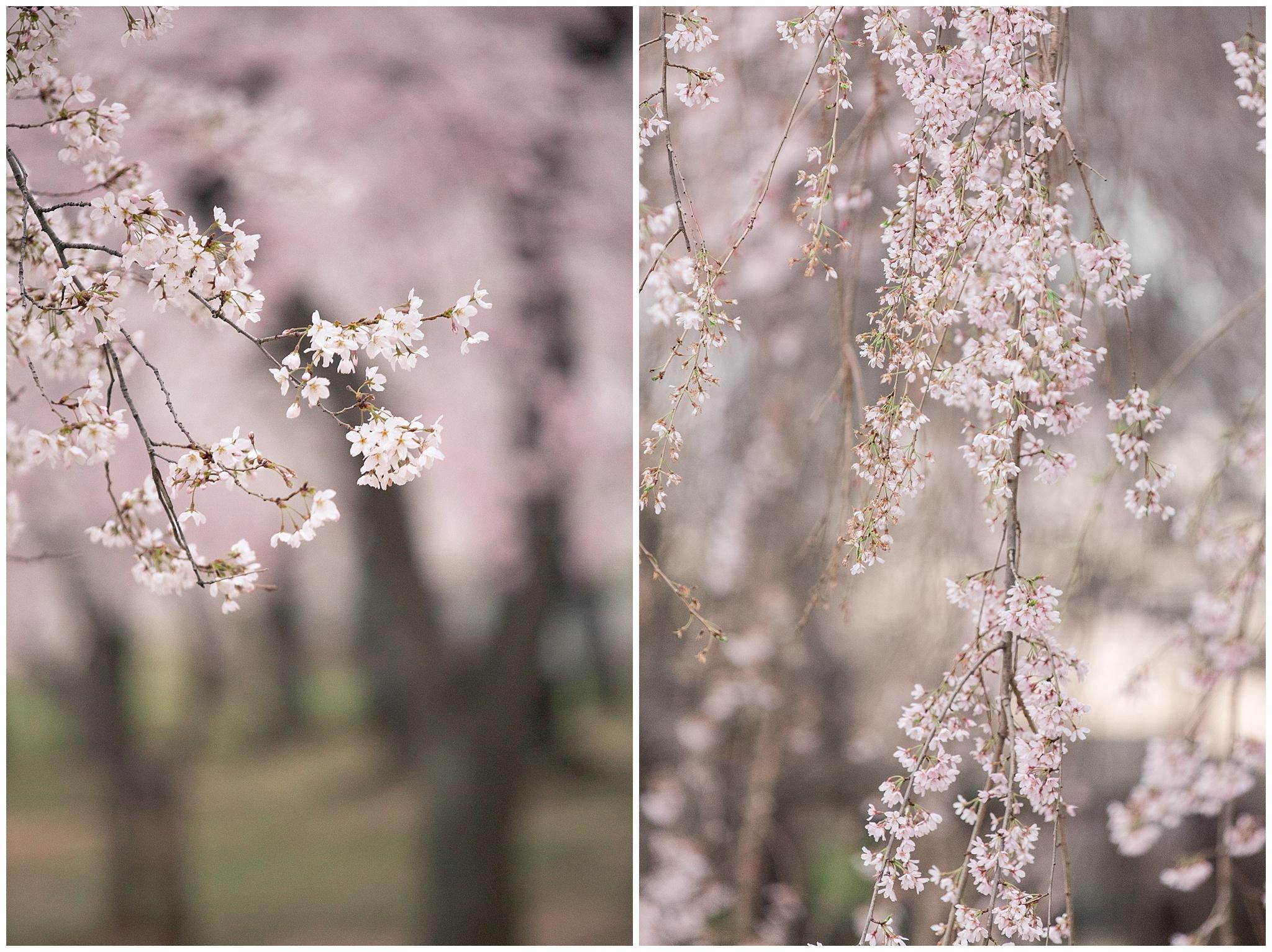 cherryblossoms_0011.jpg