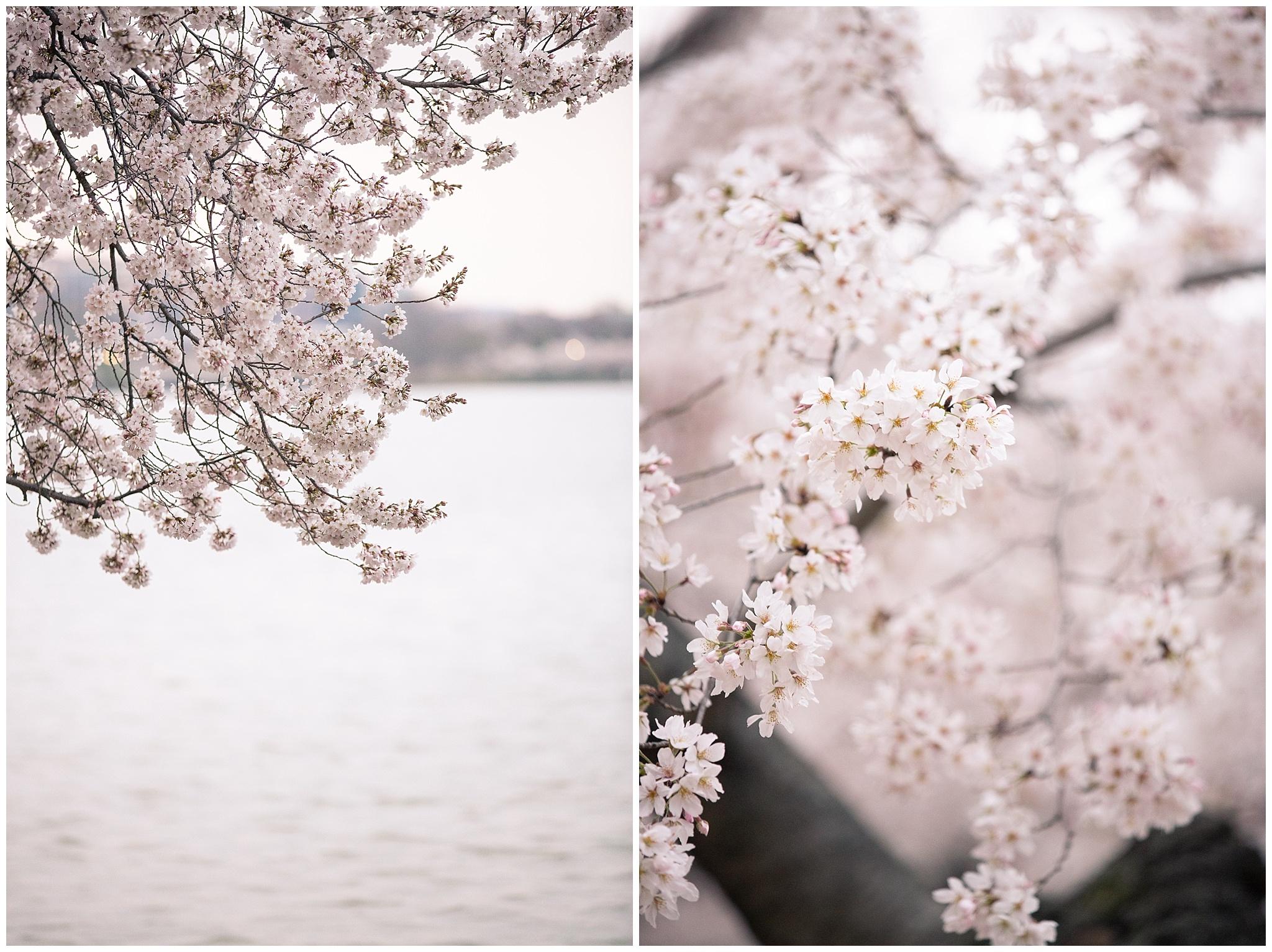 cherryblossoms_0012.jpg