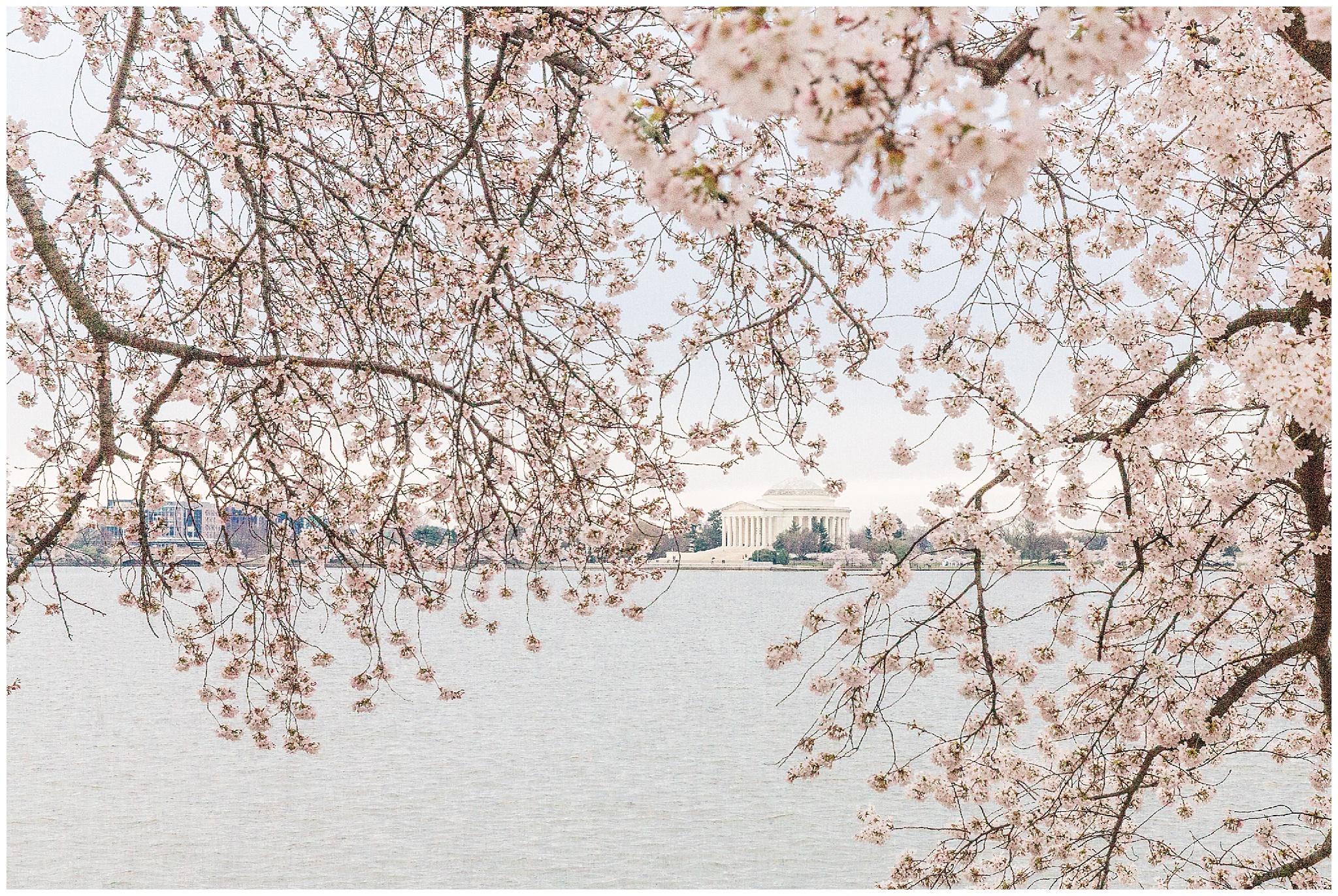 cherryblossoms_0016.jpg