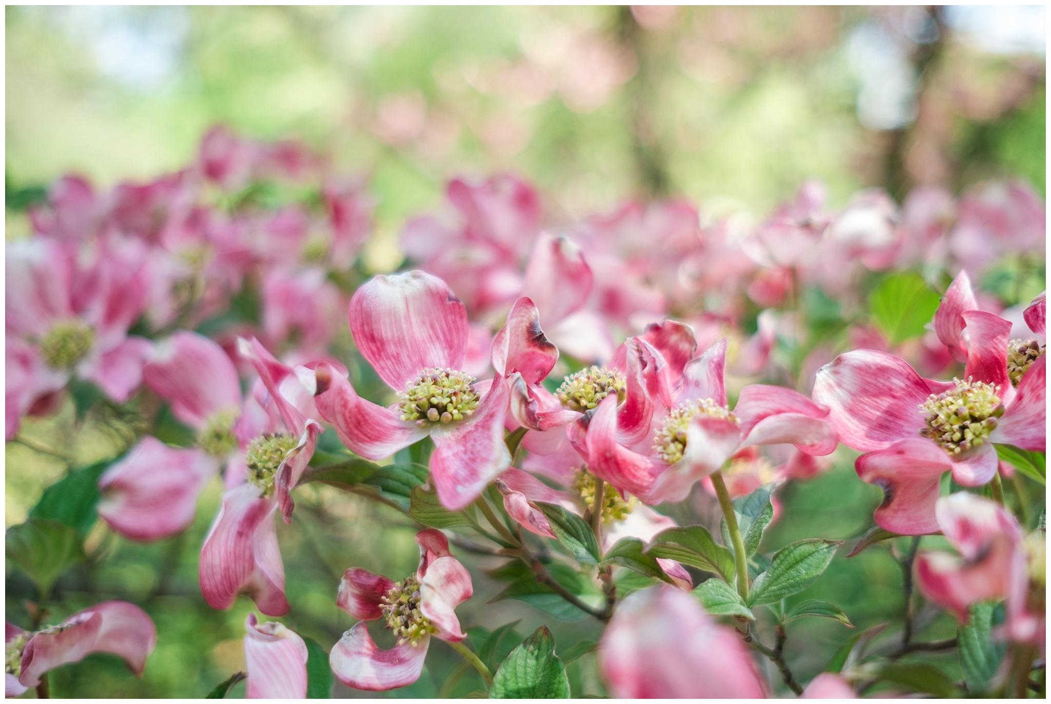 Arboretum_0003.jpg