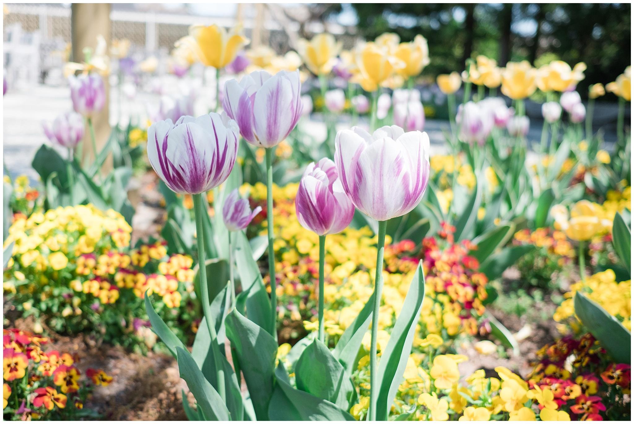 Arboretum_0008.jpg