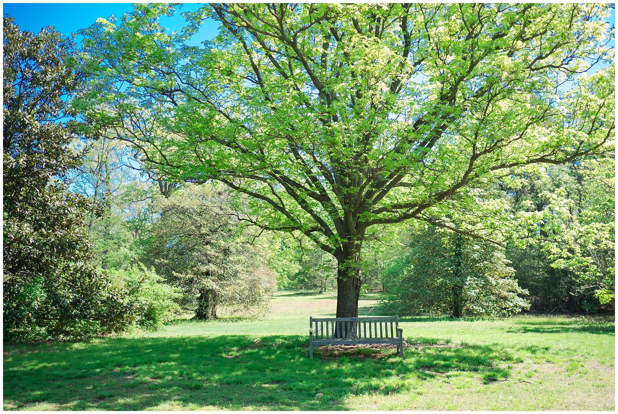 Arboretum_0007.jpg