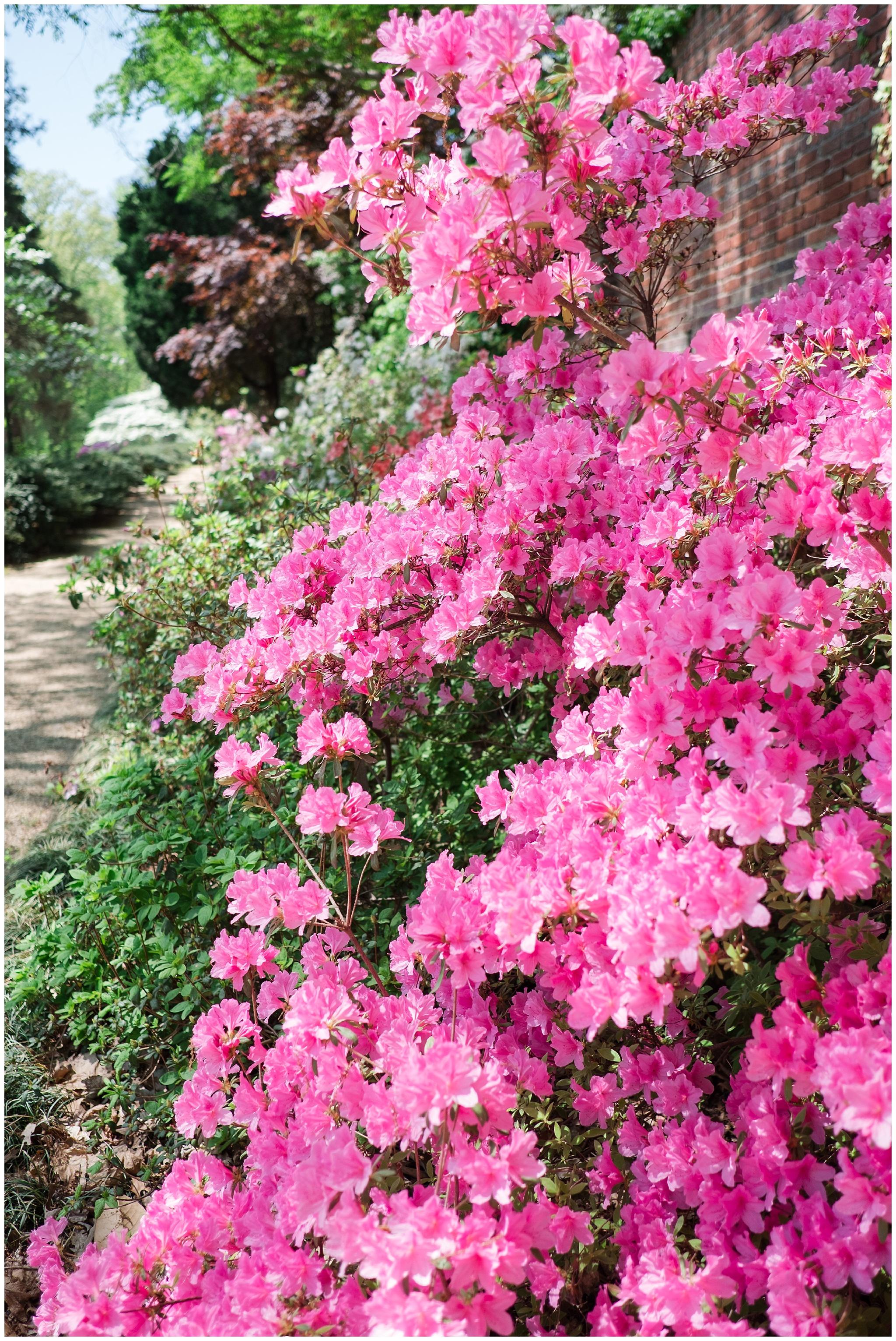 Arboretum_0015.jpg