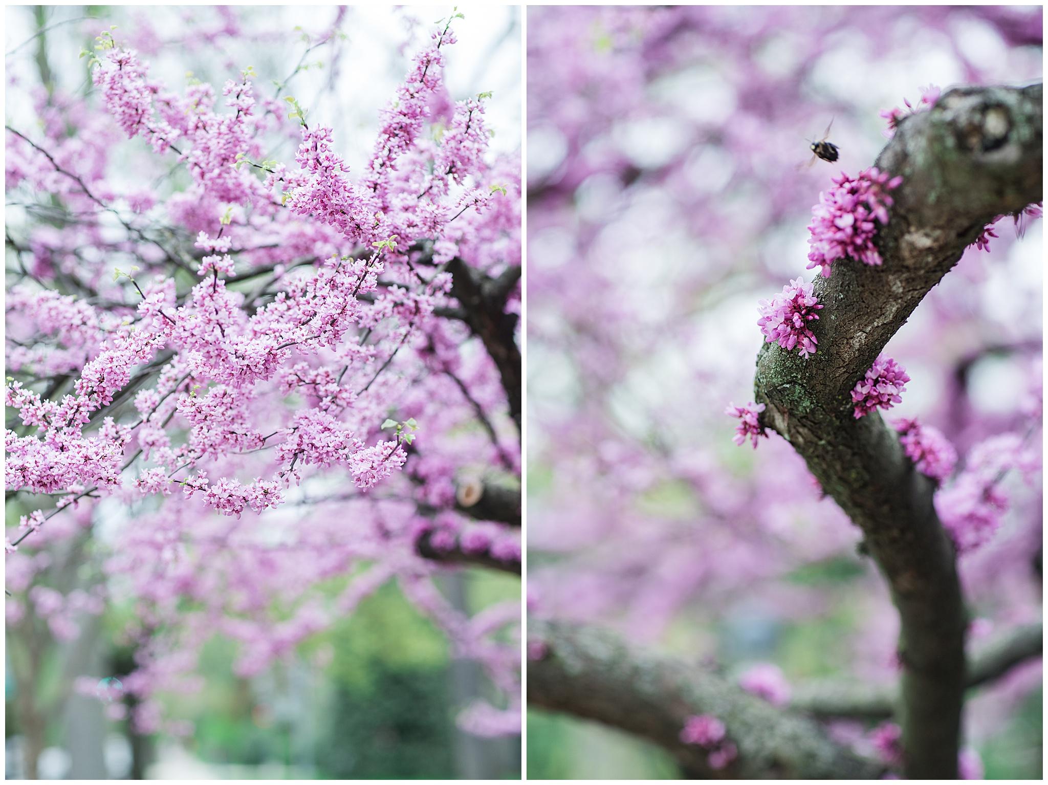 SpringWalk_0037.jpg