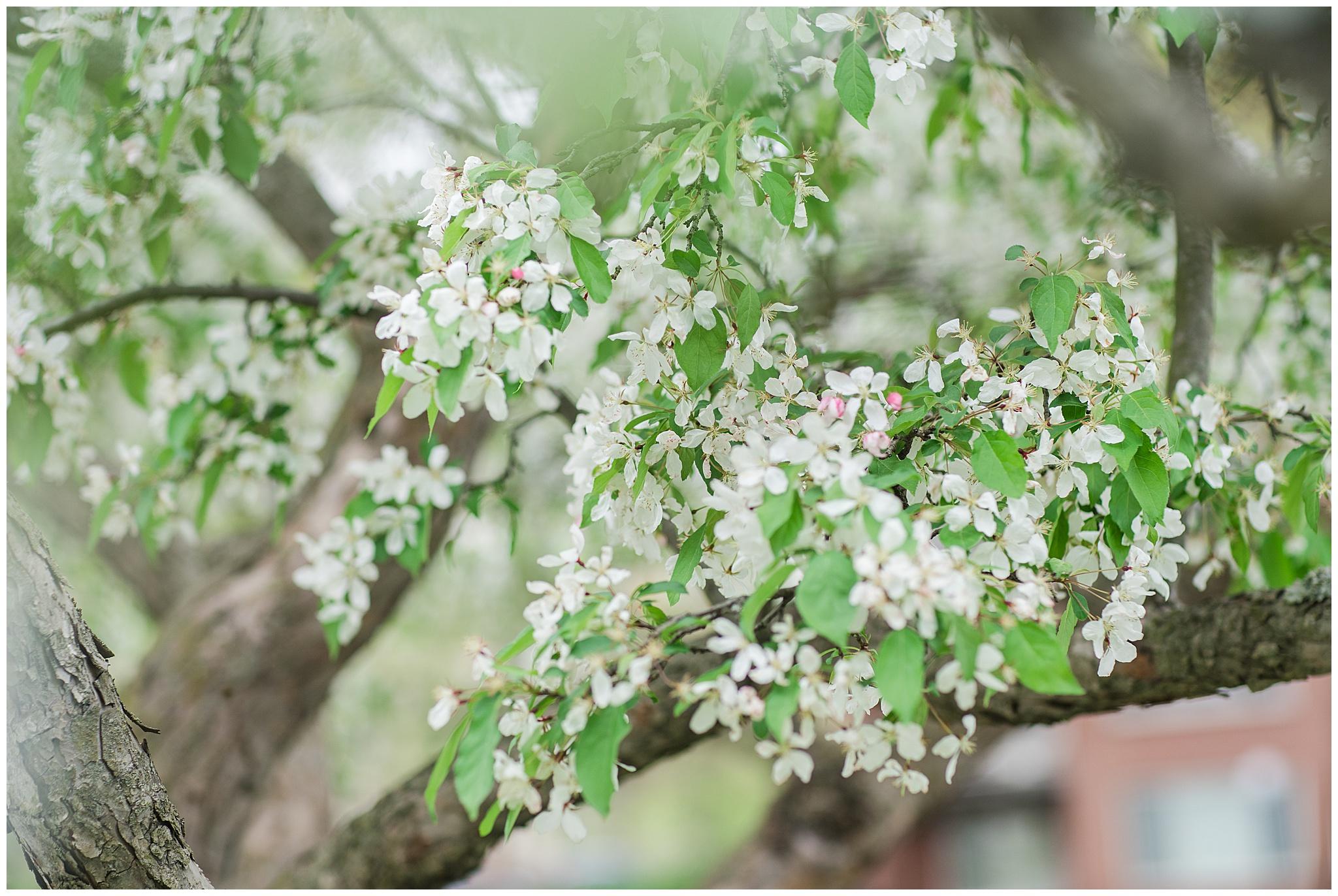SpringWalk_0040.jpg