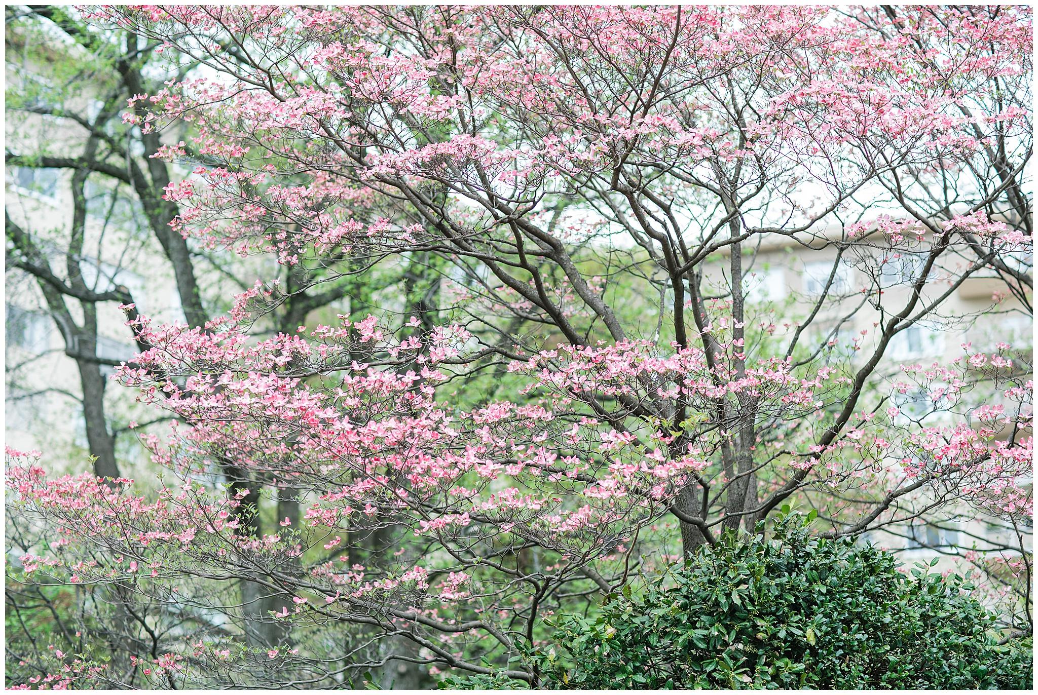 SpringWalk_0039.jpg