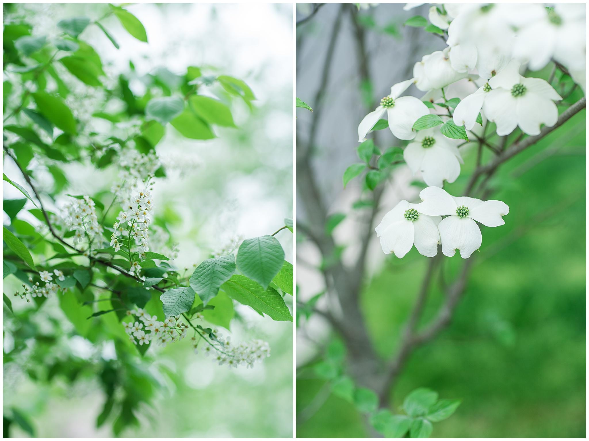SpringWalk_0045.jpg