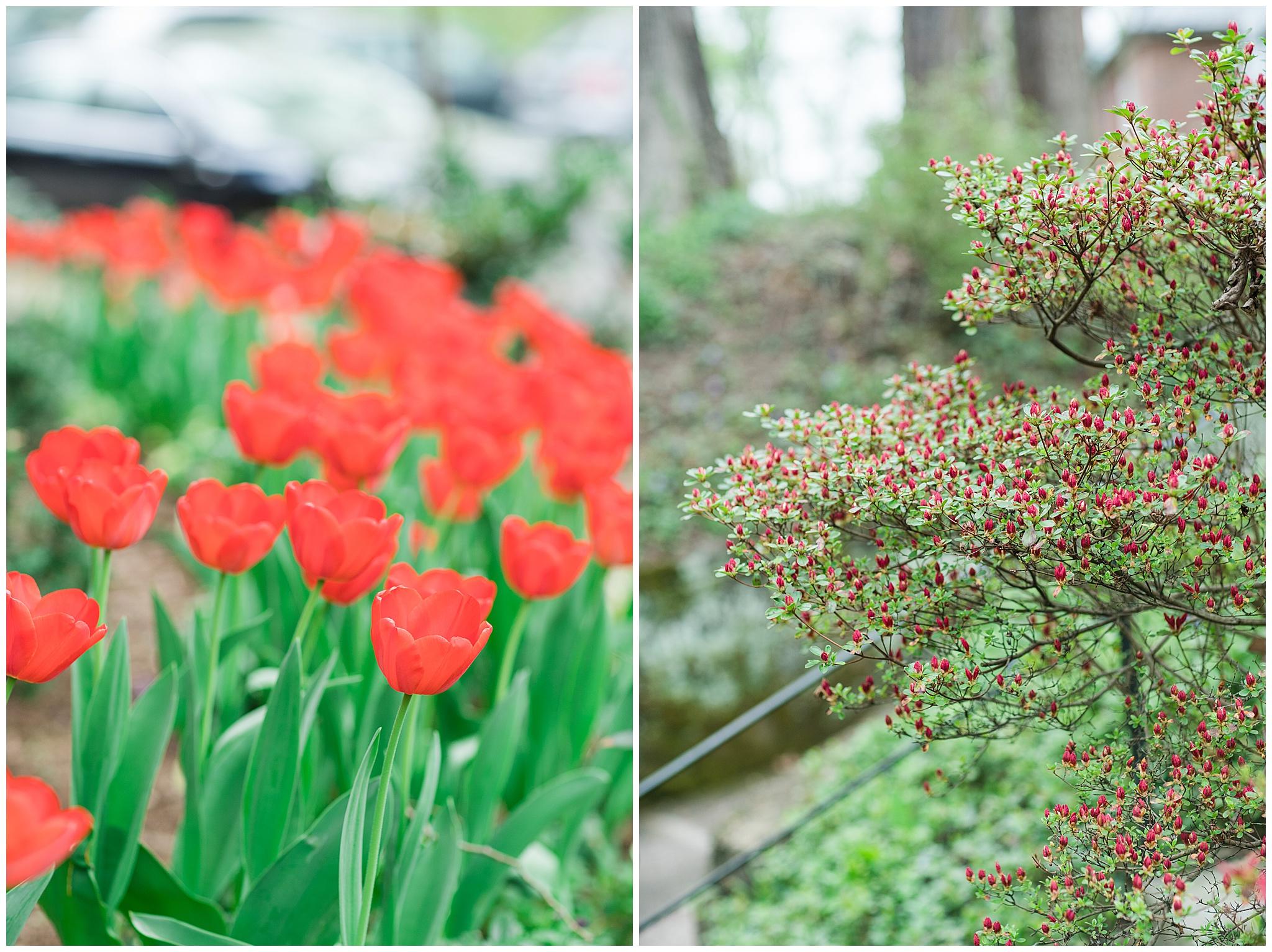 SpringWalk_0046.jpg