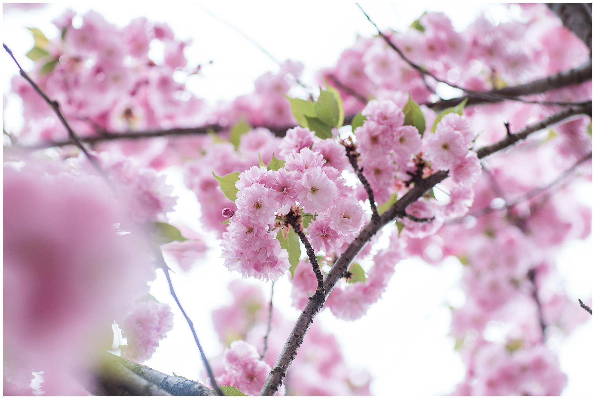 SpringWalk_0053.jpg