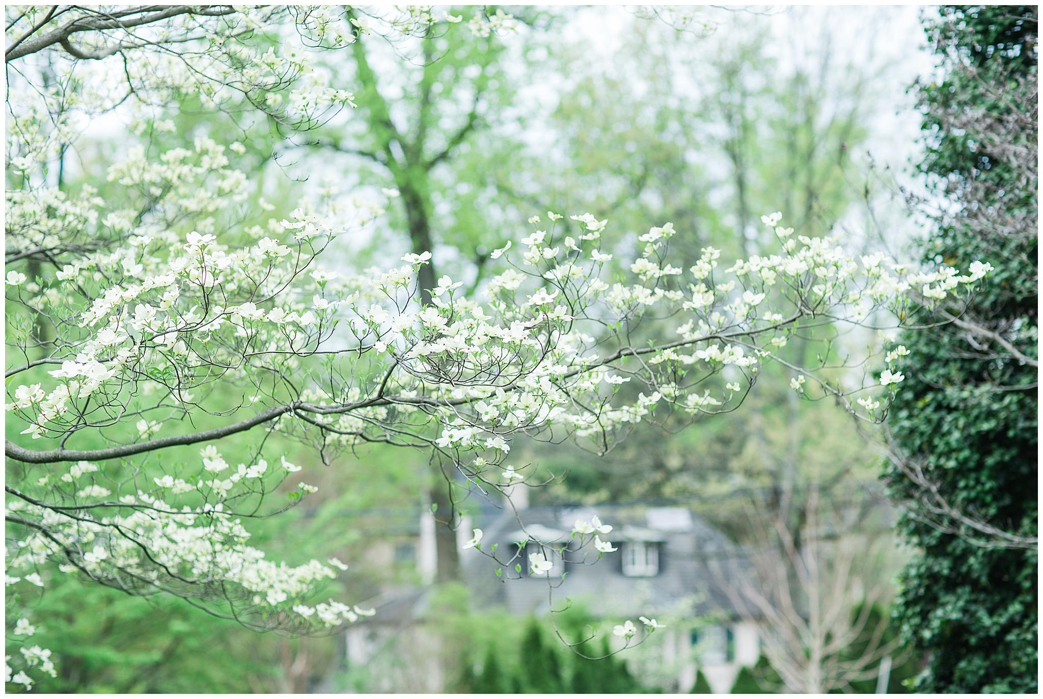 SpringWalk_0057.jpg