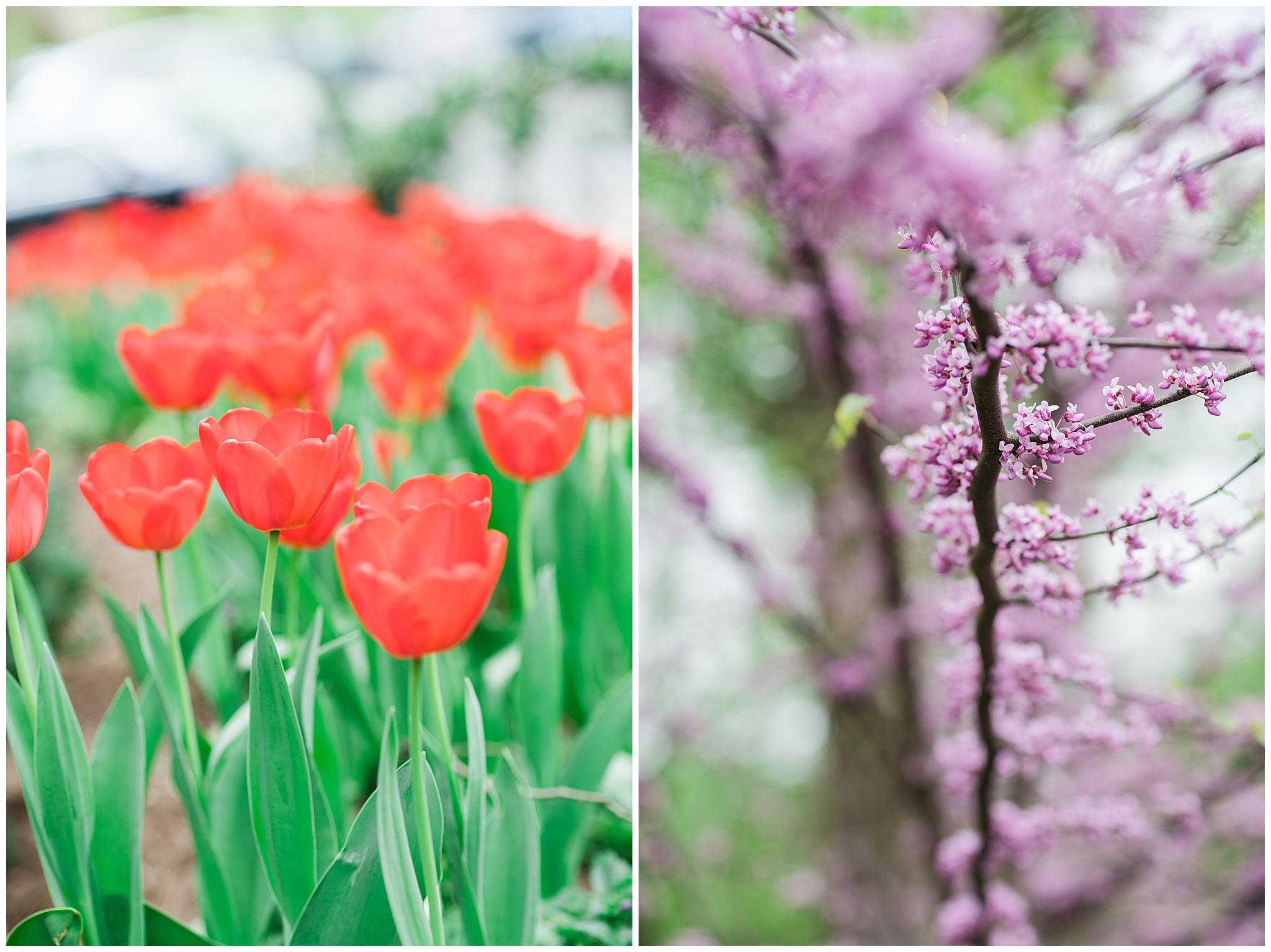 SpringWalk_0062.jpg