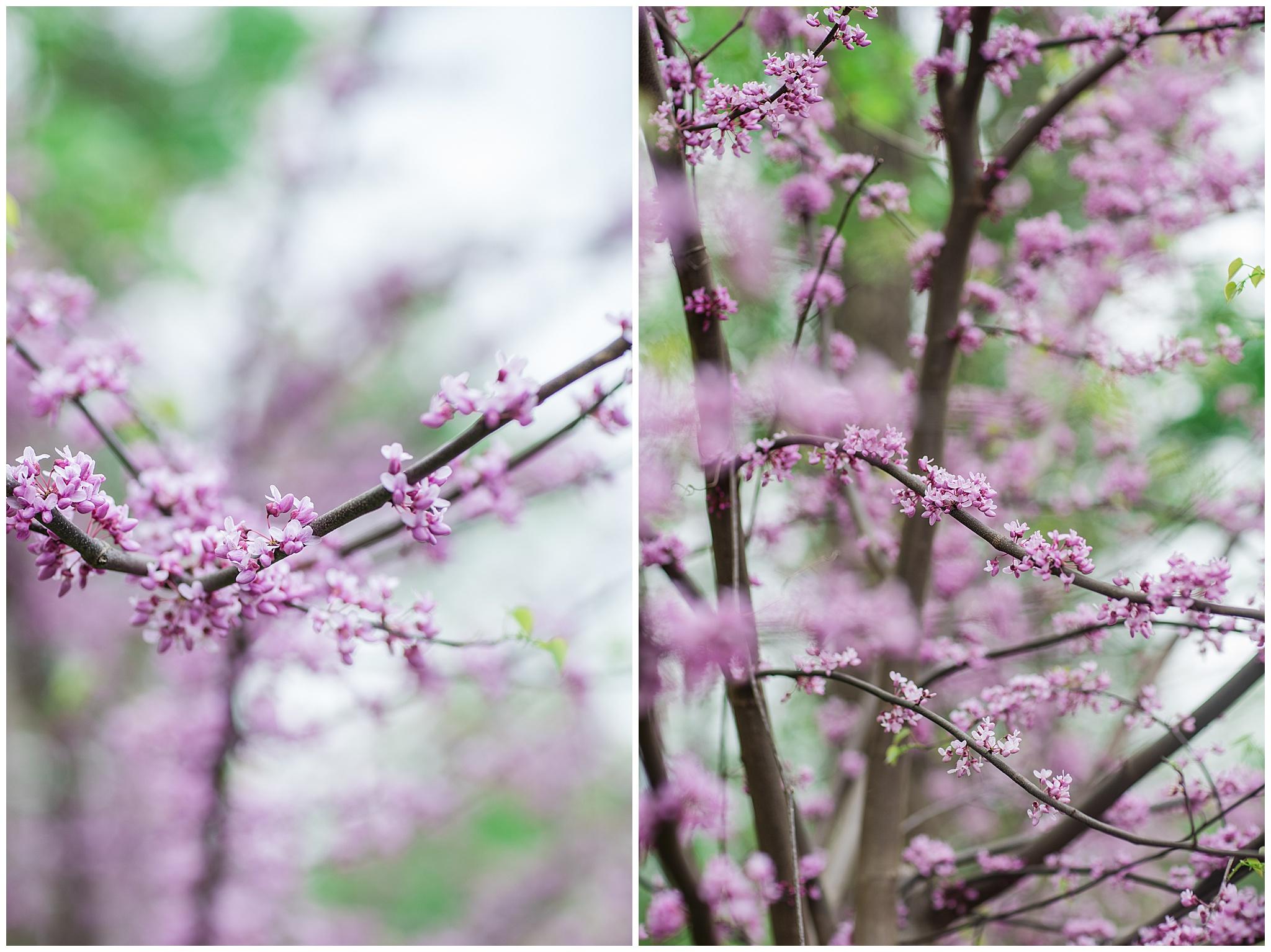 SpringWalk_0063.jpg