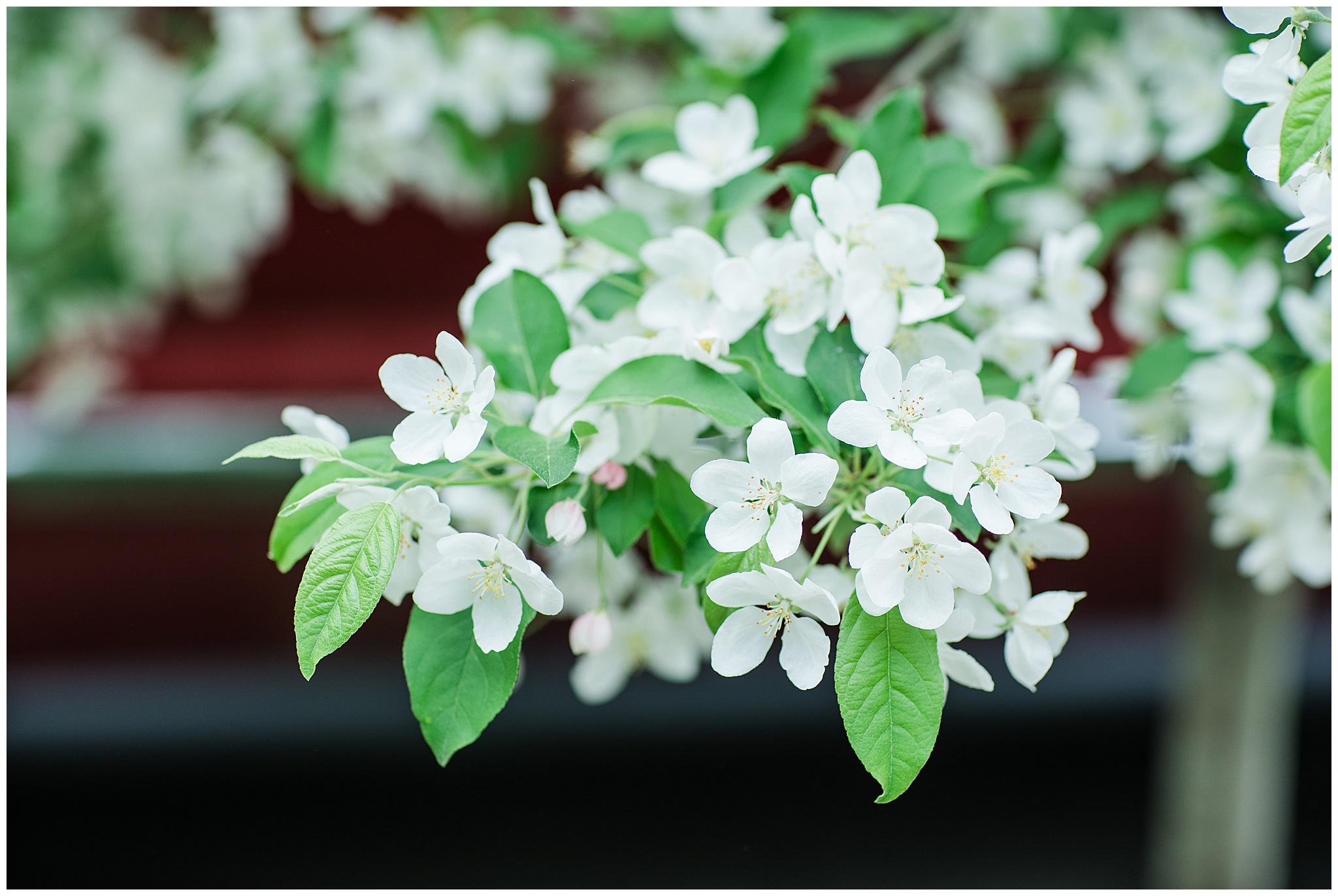 SpringWalk_0065.jpg