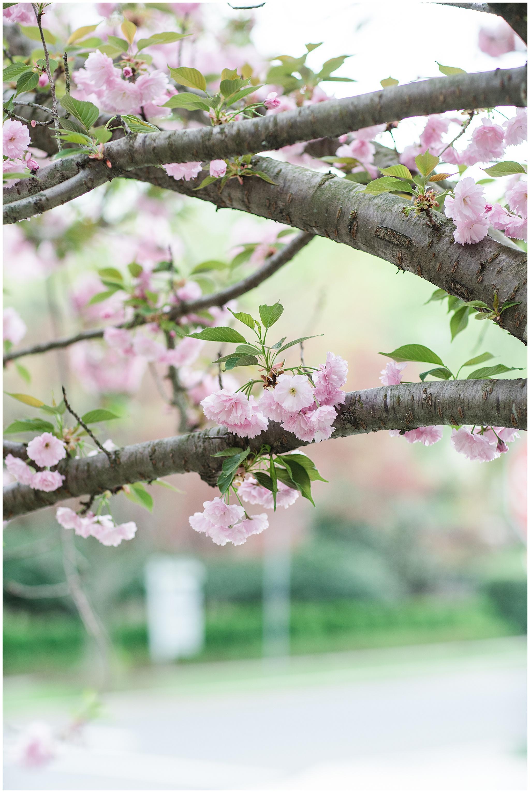 SpringWalk_0071.jpg