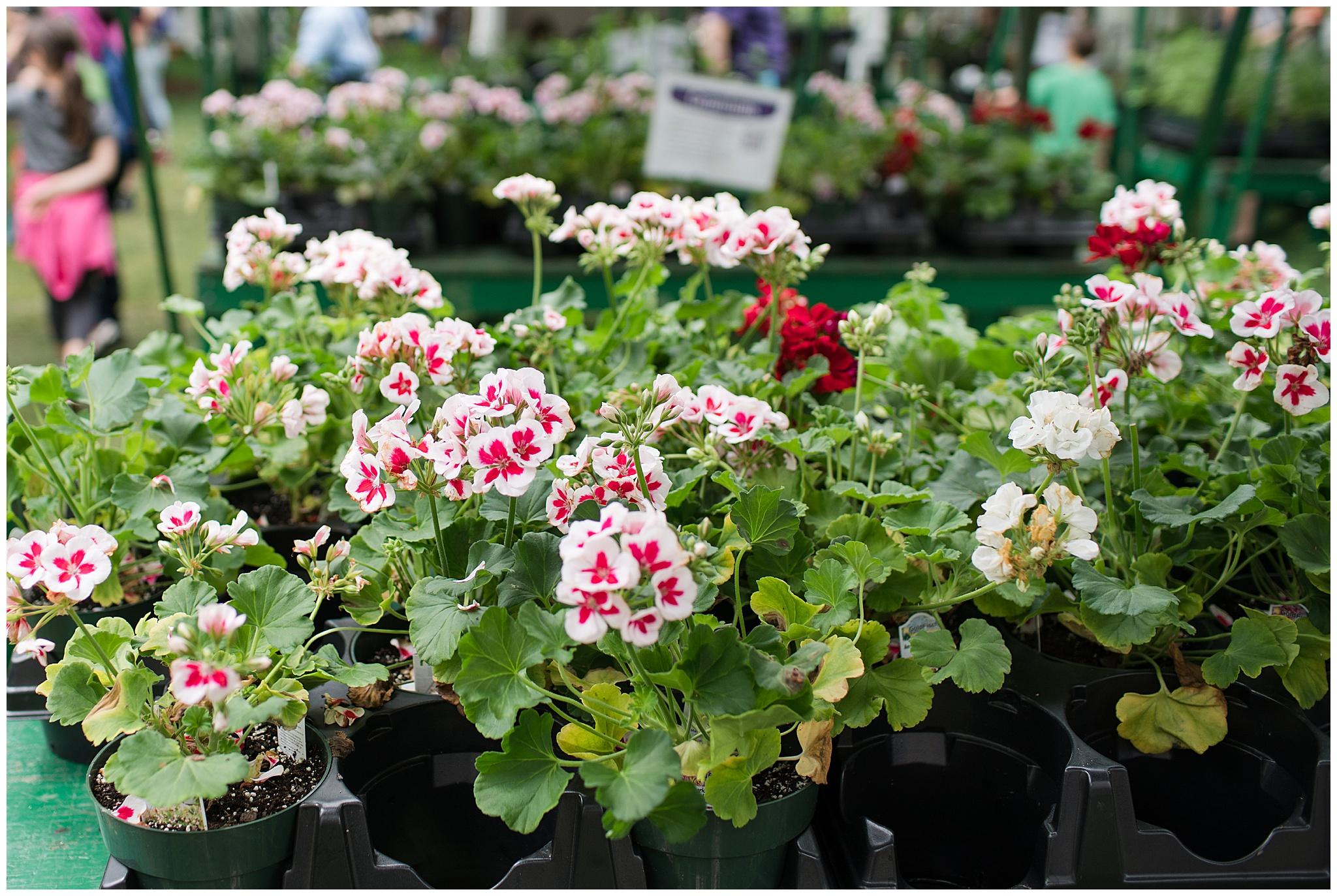 flowermart_0009.jpg