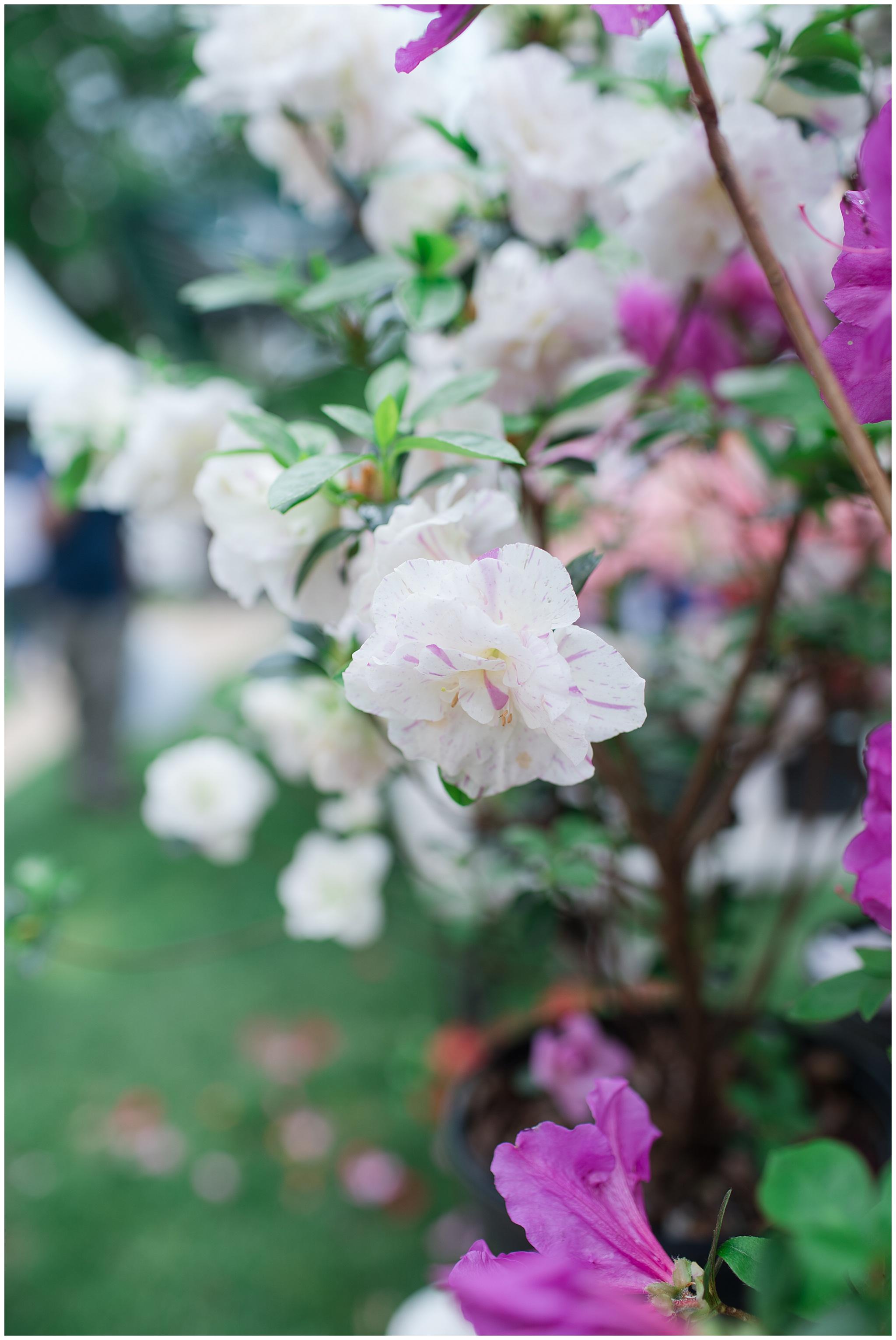 flowermart_0014.jpg