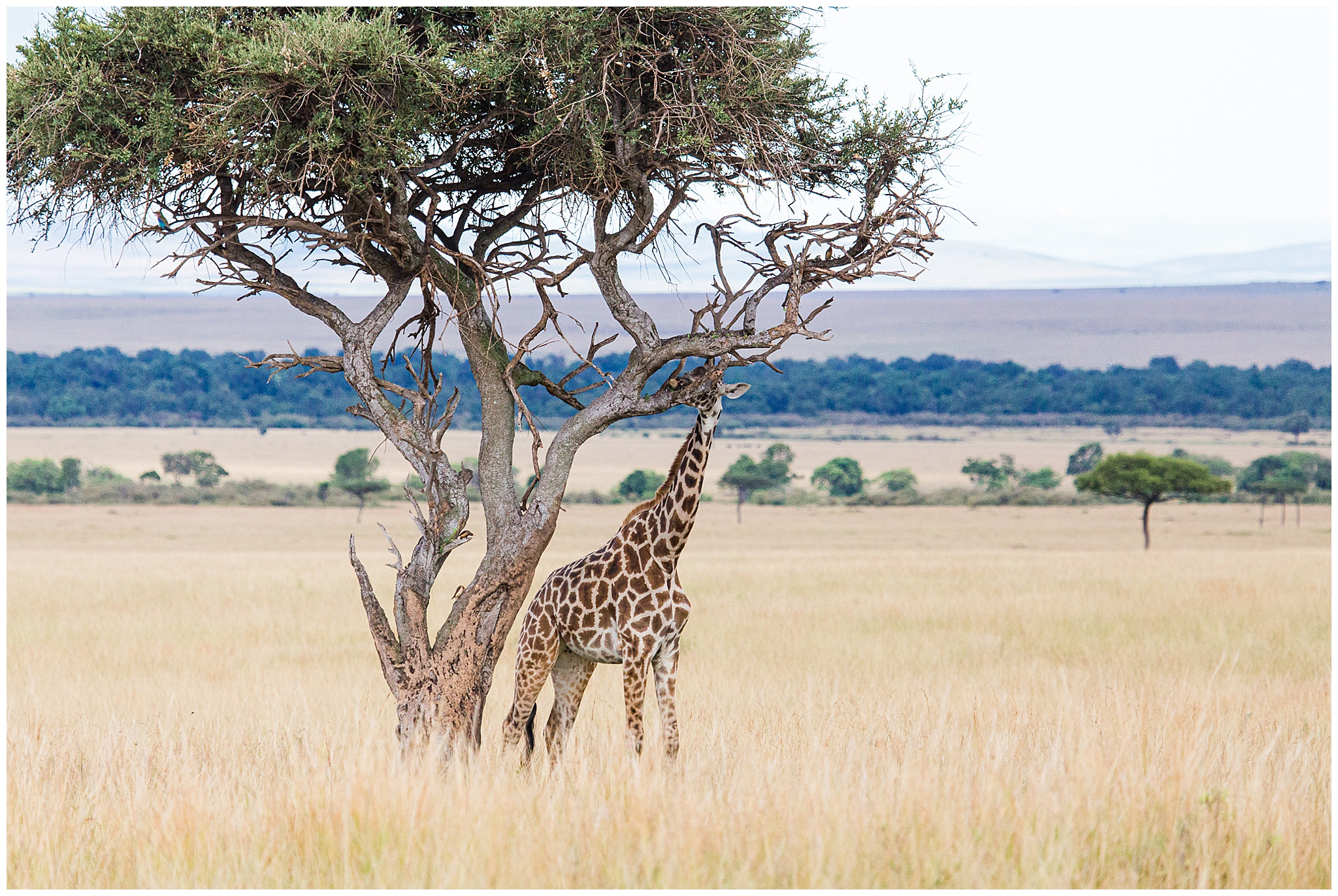 africa_0042.jpg