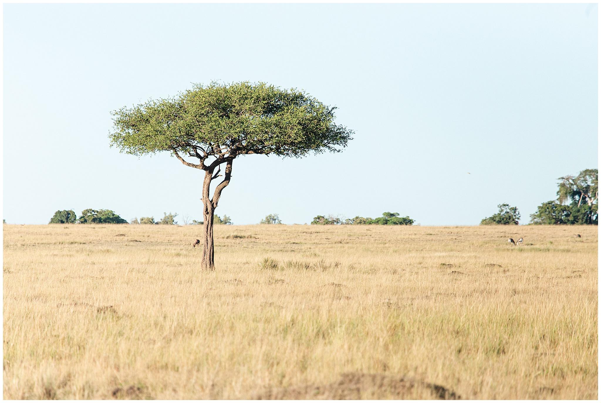 africa_0062.jpg