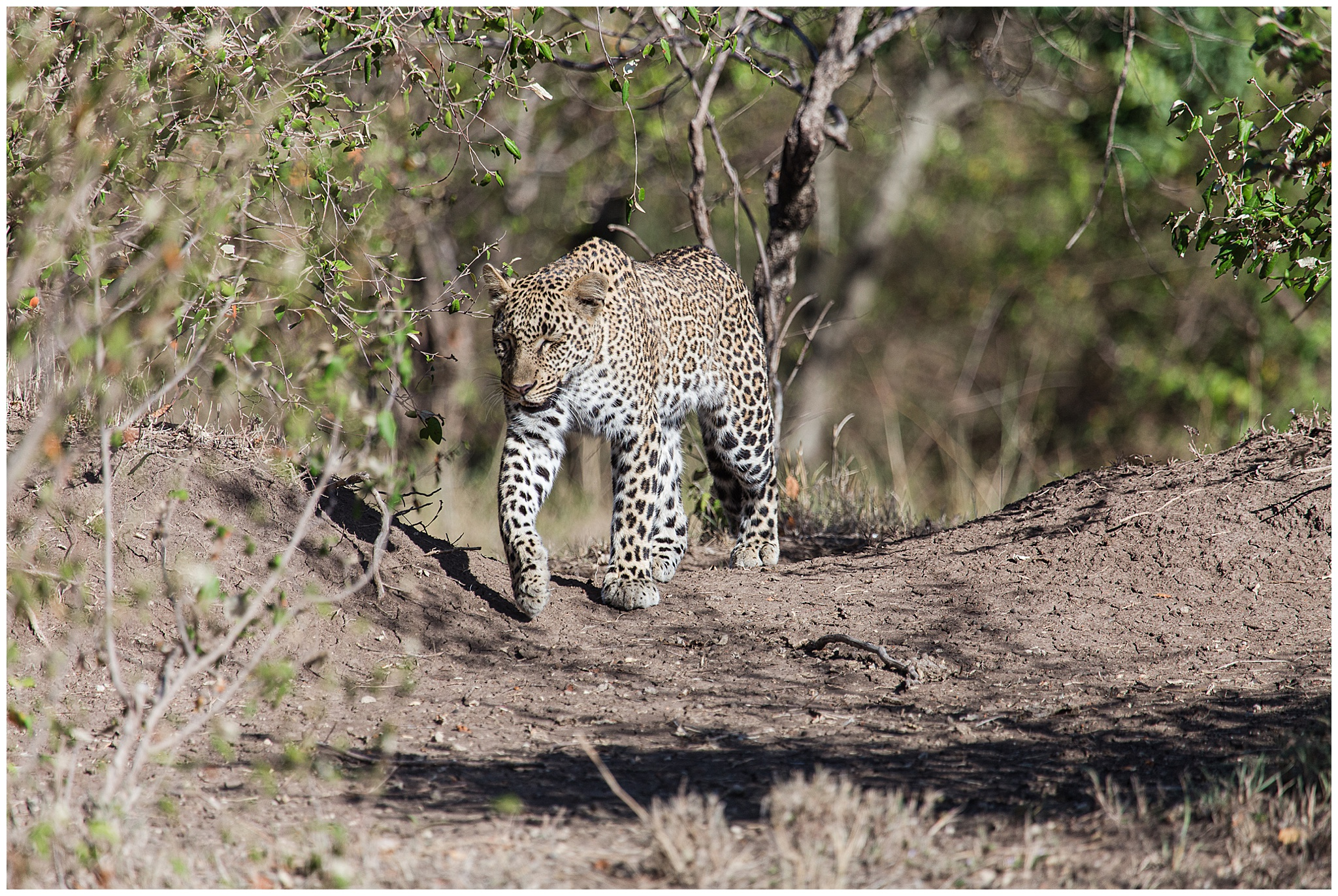 africa_0172.jpg