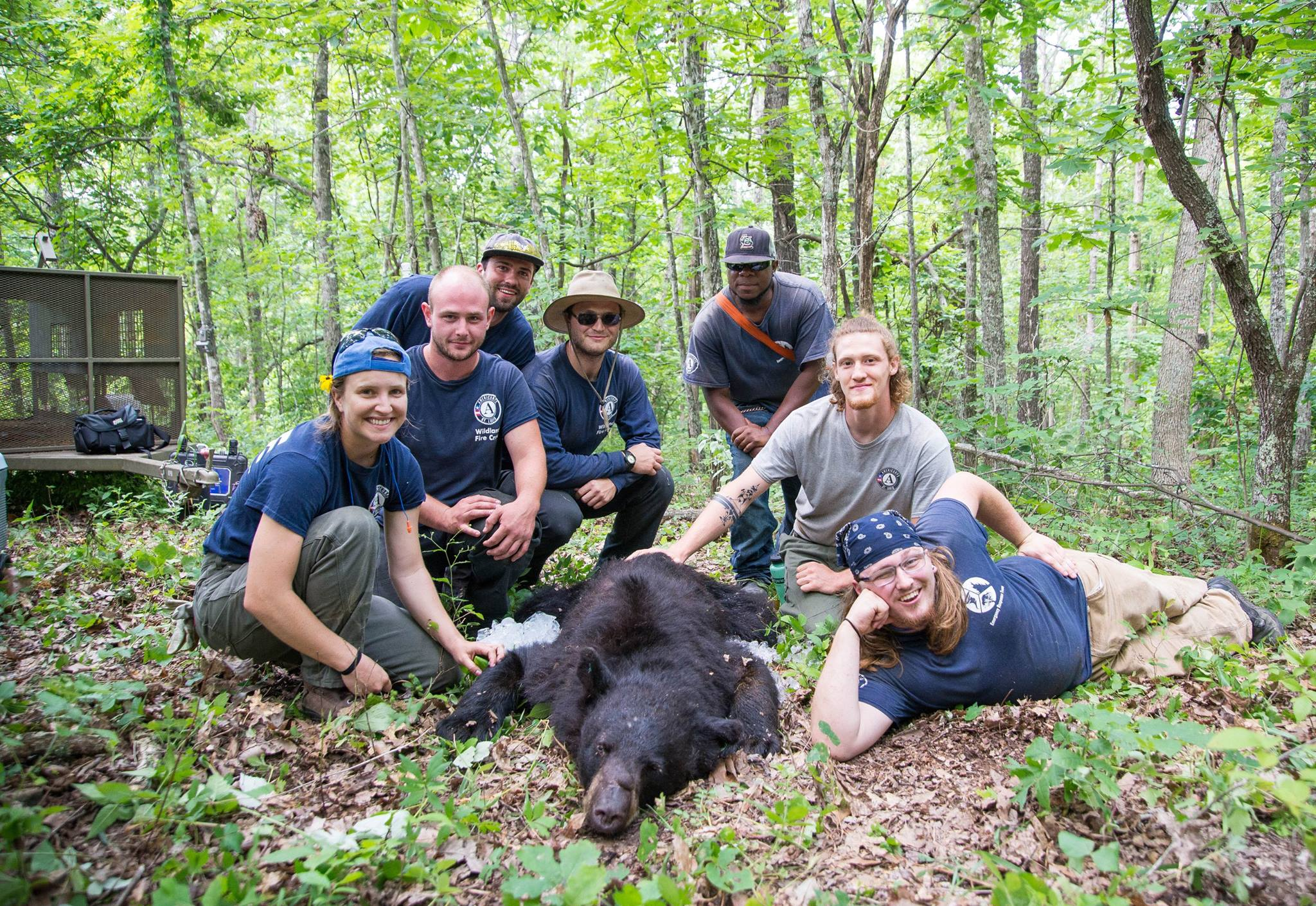 Year 23 Members assist the Missouri Department of Conservation with bear tagging in Seymour, MO, 2017. Members helped measure and weigh the bear for further research on bear movement throughout the Ozarks region of Missouri (Photo by Lucas Peterson, Year 23)