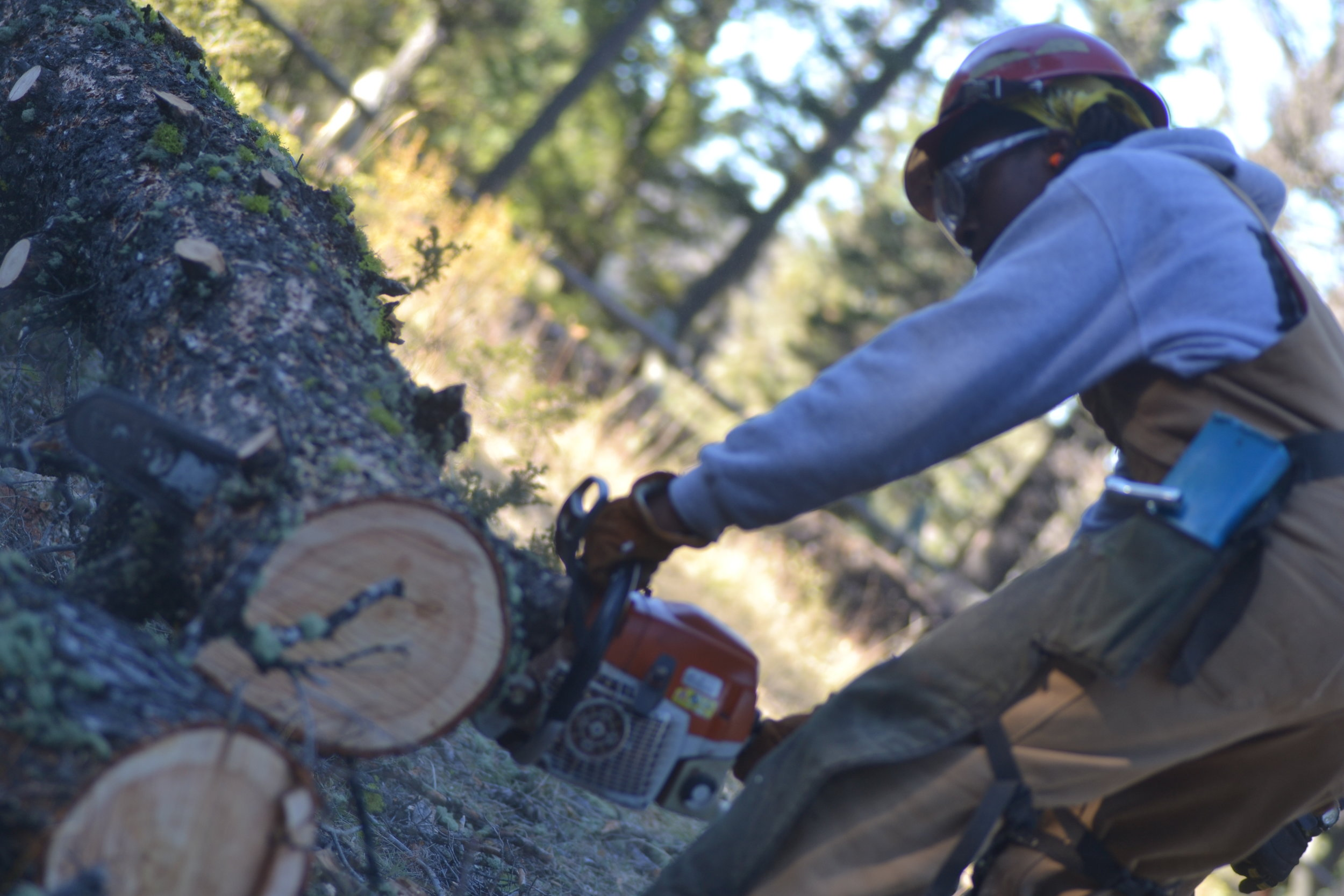 Year 24 member, Matthew Norman, bucks up a downed tree in Montana, 2017