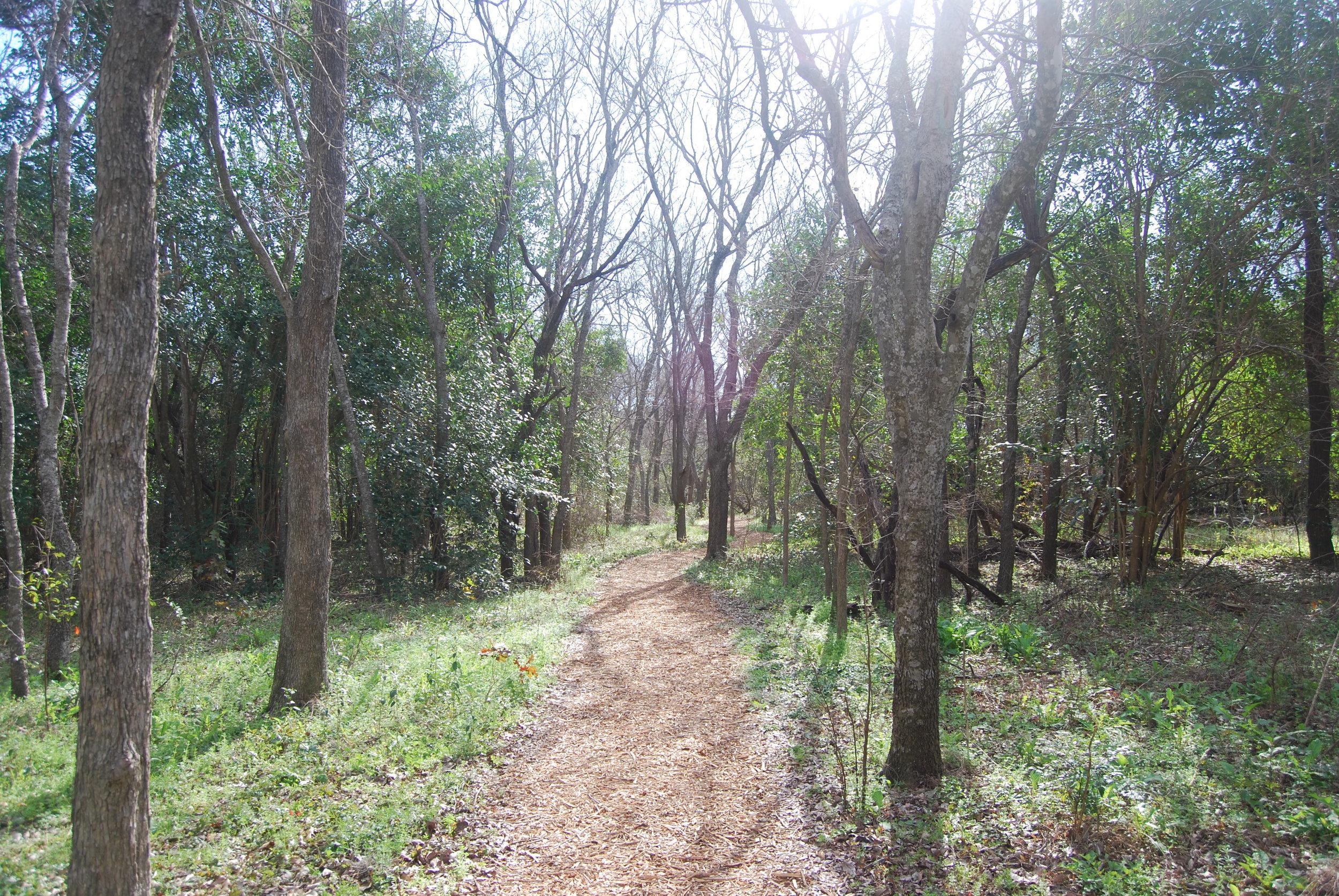 trail (2).JPG