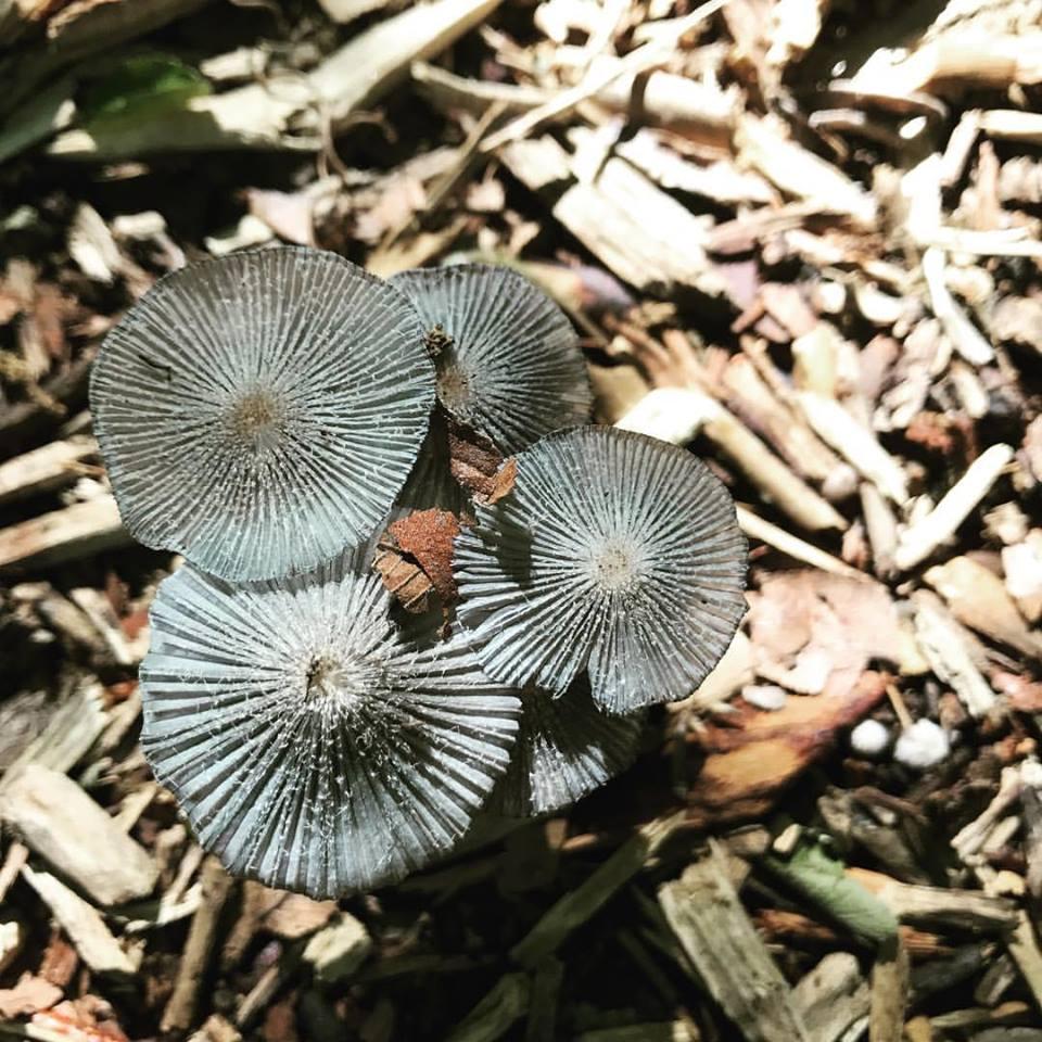 HIW mushroom.jpg