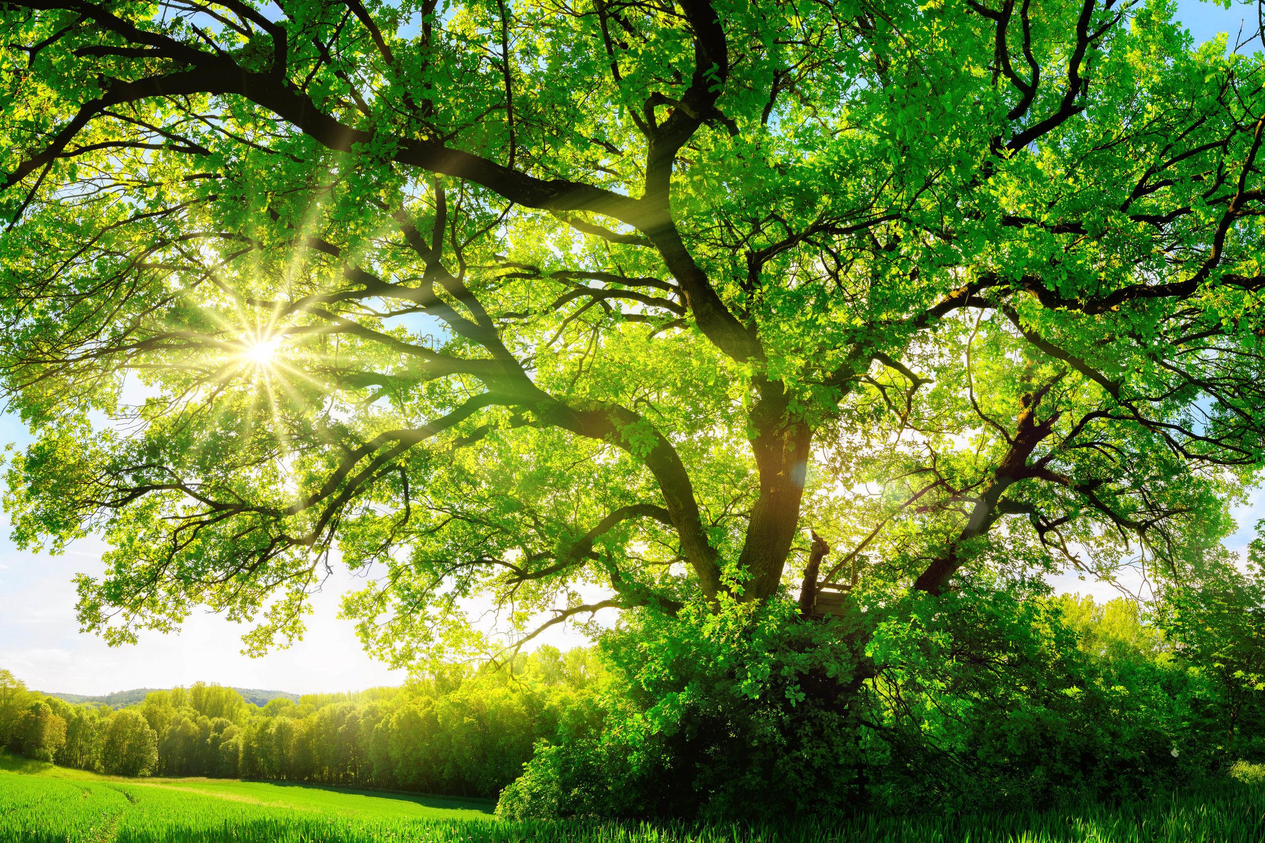 land conservation -