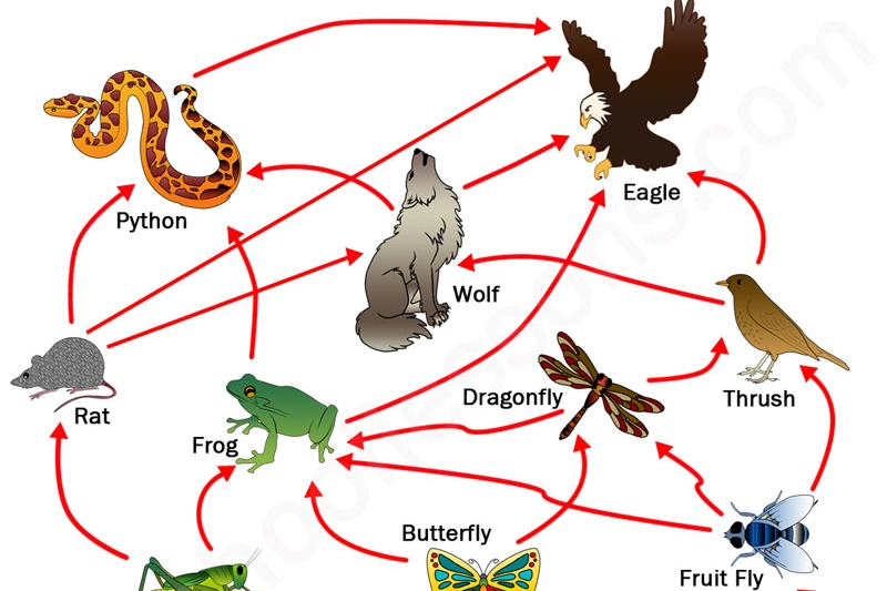 Food Web, Ecosystem & Ecology Activities - Food Pyramid IndoorFood Web Yarn Toss:Oh Deer:Invasive Species: