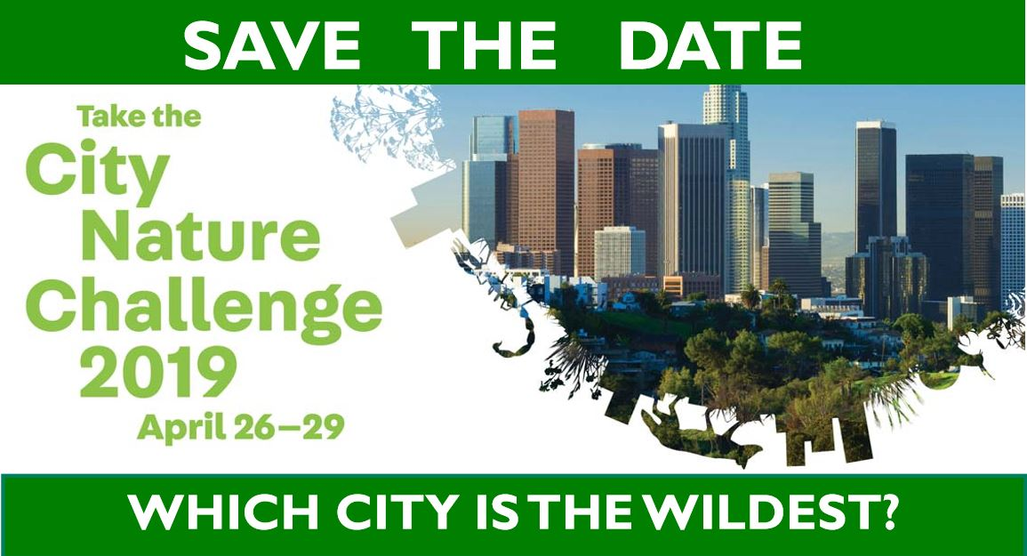 Click on the image above for a printable City Nature Challenge 2019 flyer.