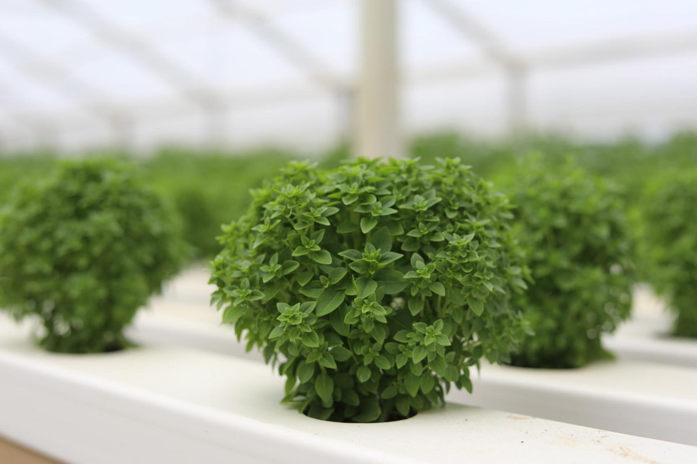 Scarborough-Fare-Herbs-3.jpg