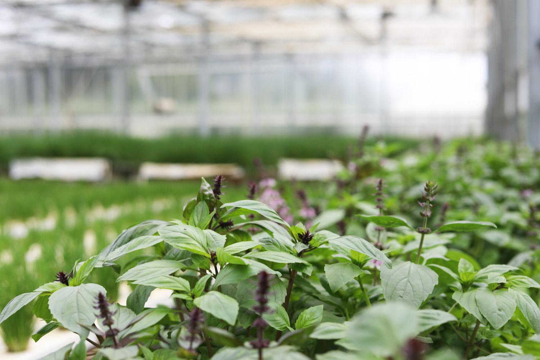 Scarborough-Fare-Herbs-4.jpg