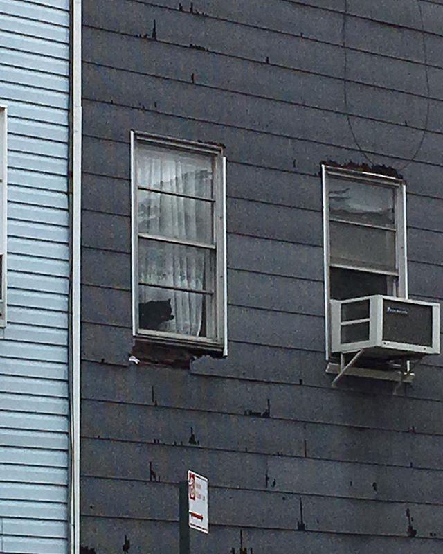 #blackcat #wavinghello #willamsburg #brooklyn