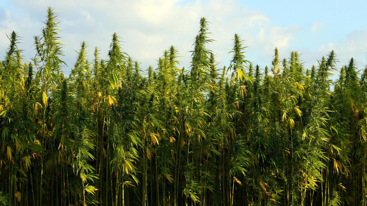 niche-cannabis-marketing.png