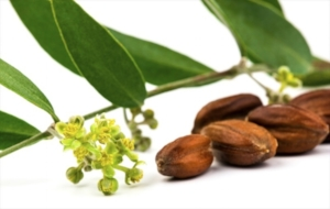Jojoba: resembles sebum, a waxy substance produced by our skim glands and so is a natural conditioner.