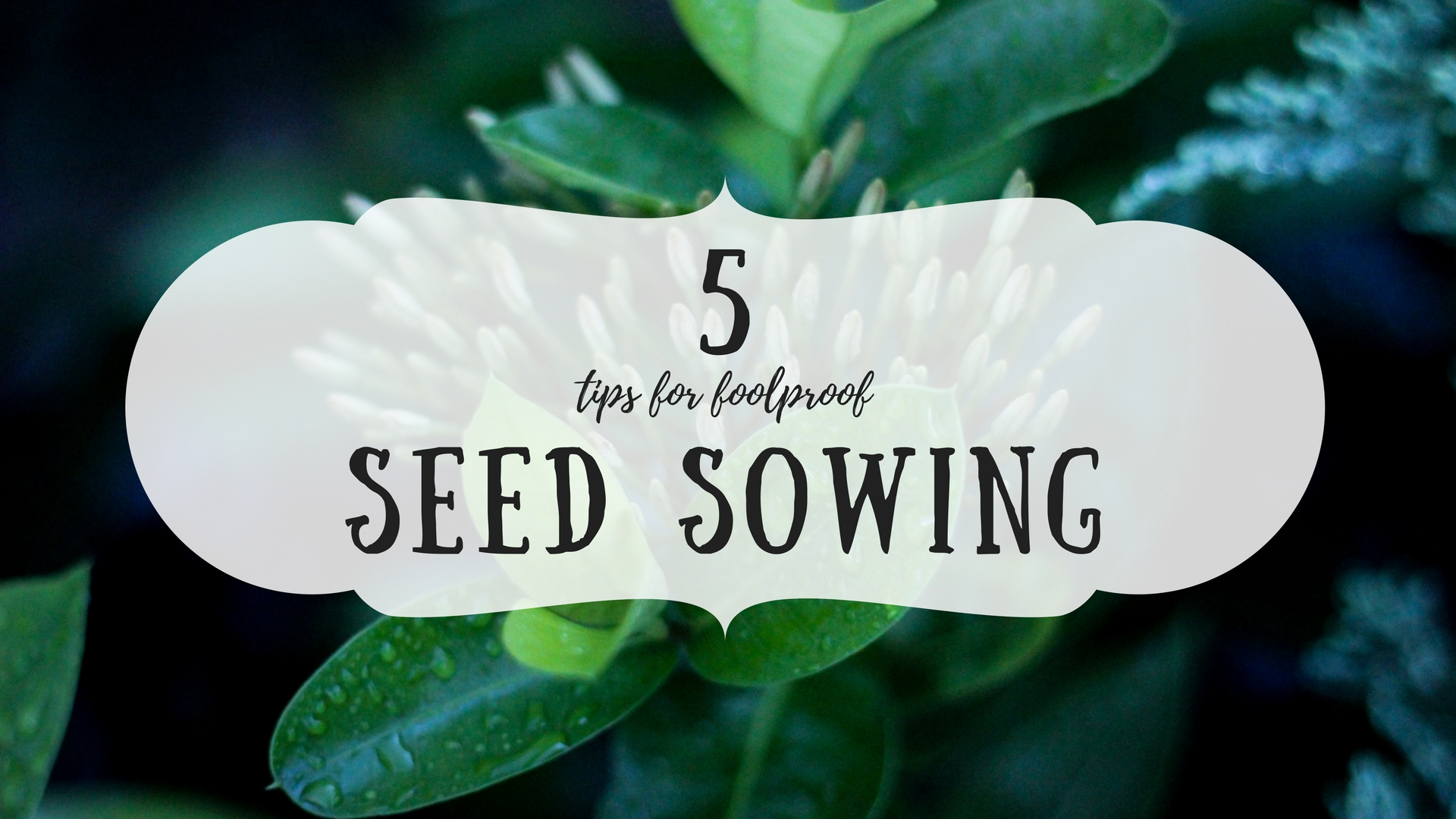 5tipsforfoolproofseedsowing