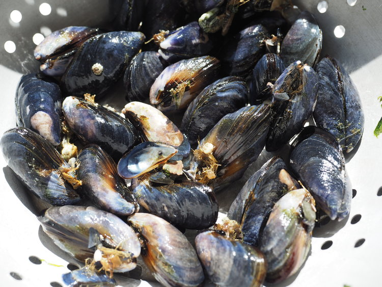 Polzeath Mussels