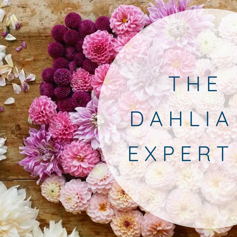The Dahlia Expert